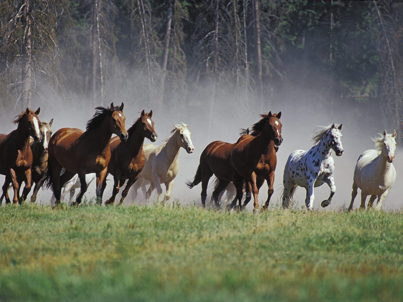wild horses free desktop background free wallpaper image