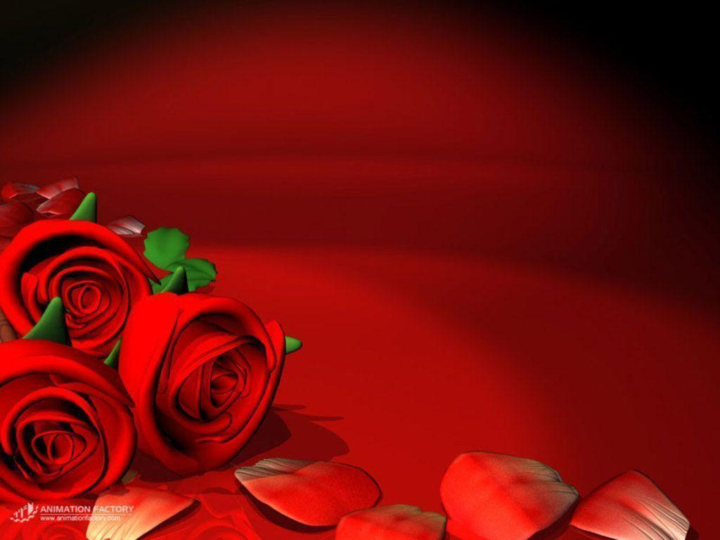 red rose flower backgrounds  wallpaper cave, Beautiful flower