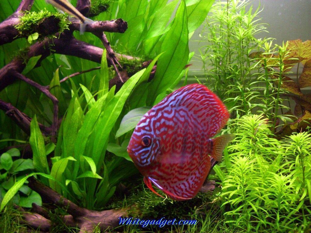 Tropical wallpapers 2015 wallpaper cave for Exotic fish tanks