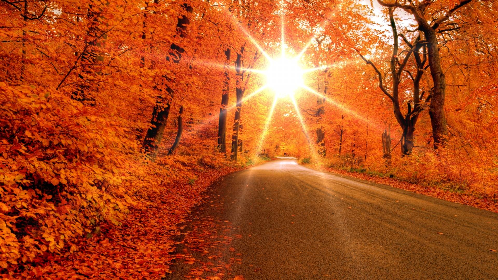 fall leaves wallpapers free wallpaper cave