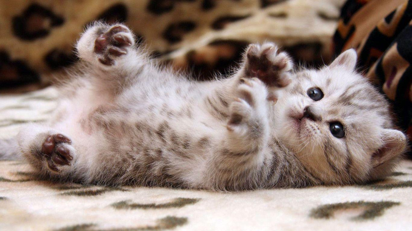 Latest Cats HD New Wallpapers Free Download | HD Free Wallpapers ...