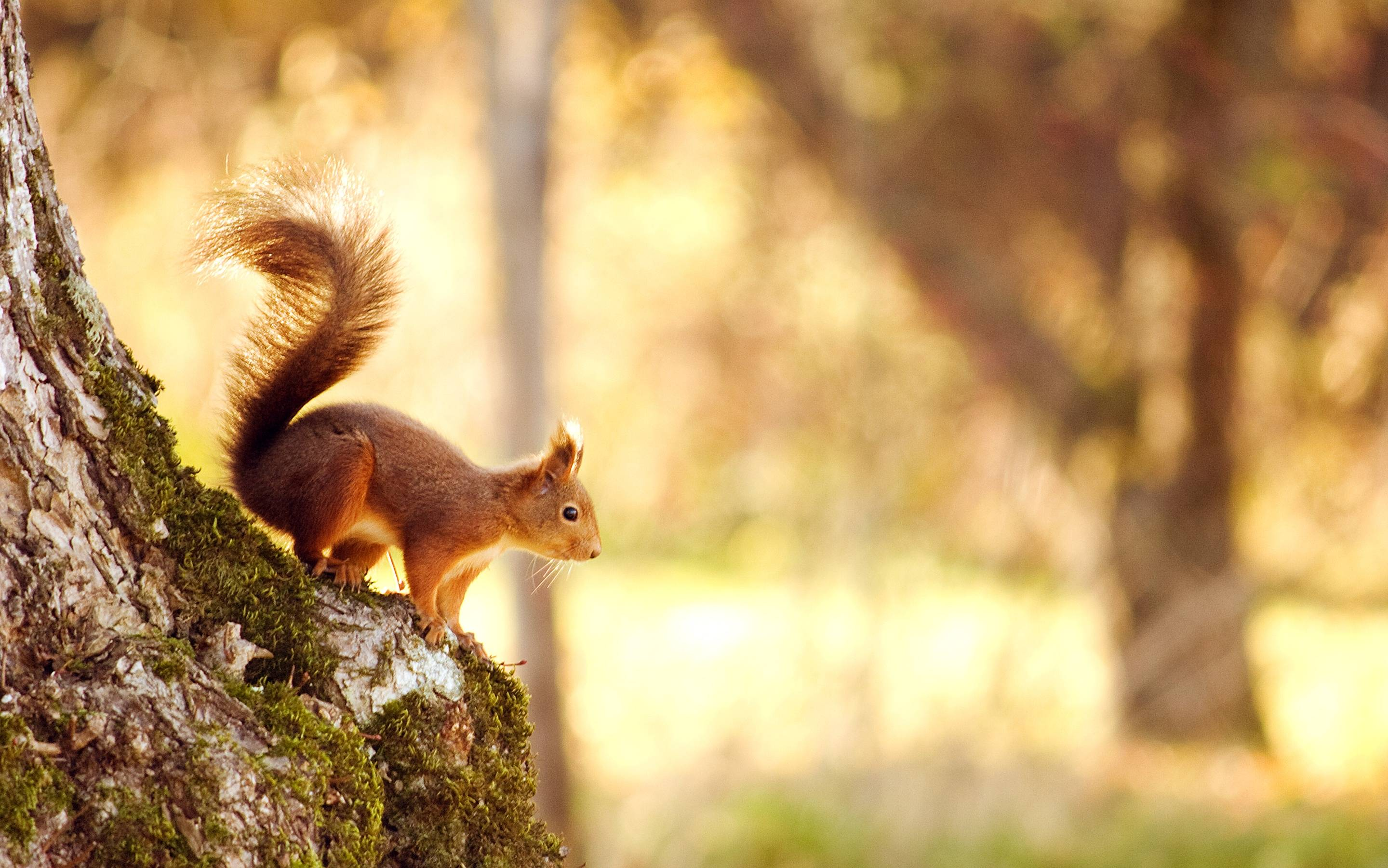 Squirrel Wallpaper 39776 in Animals - Telusers.