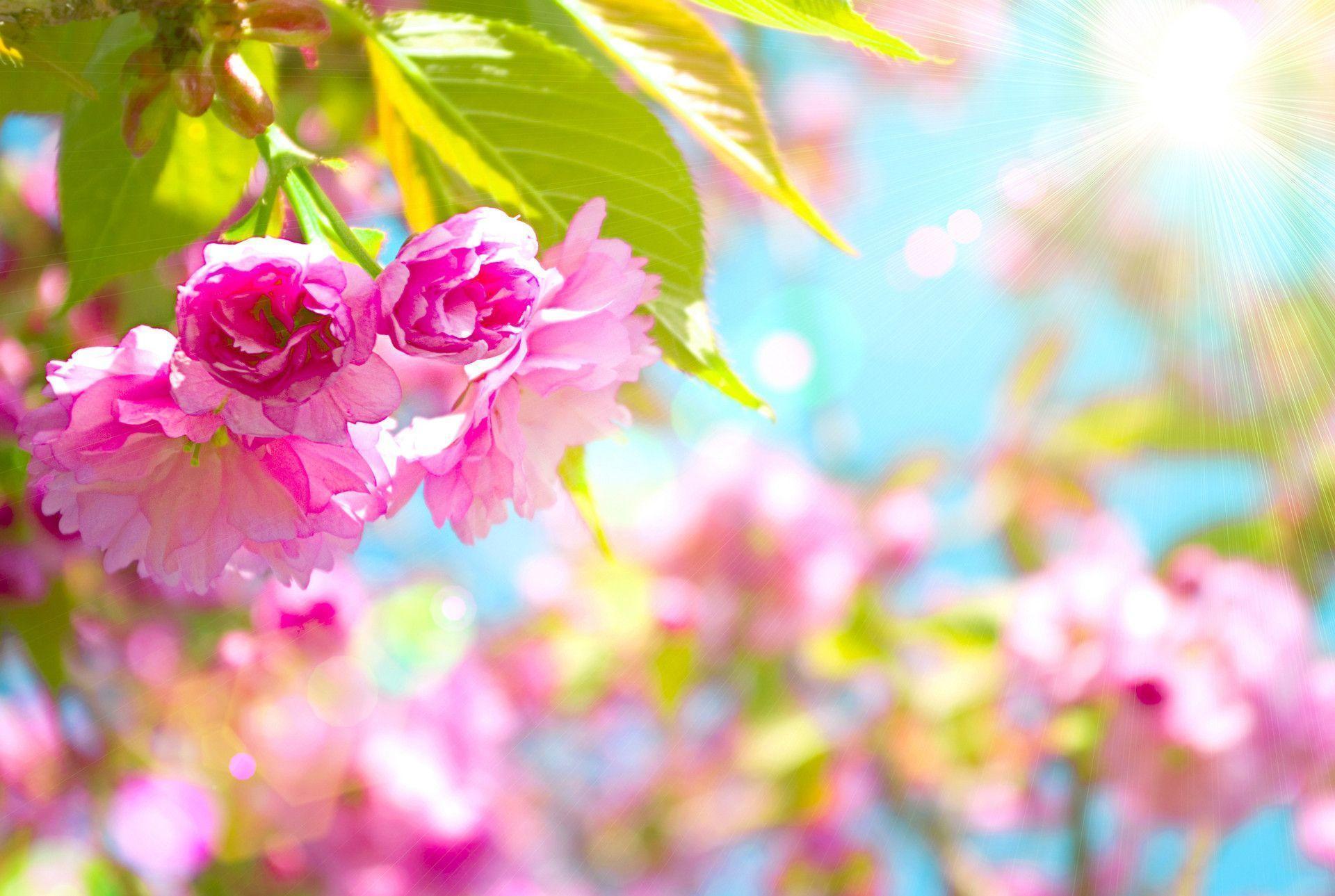 Free Spring Backgrounds Desktop - Wallpaper Cave