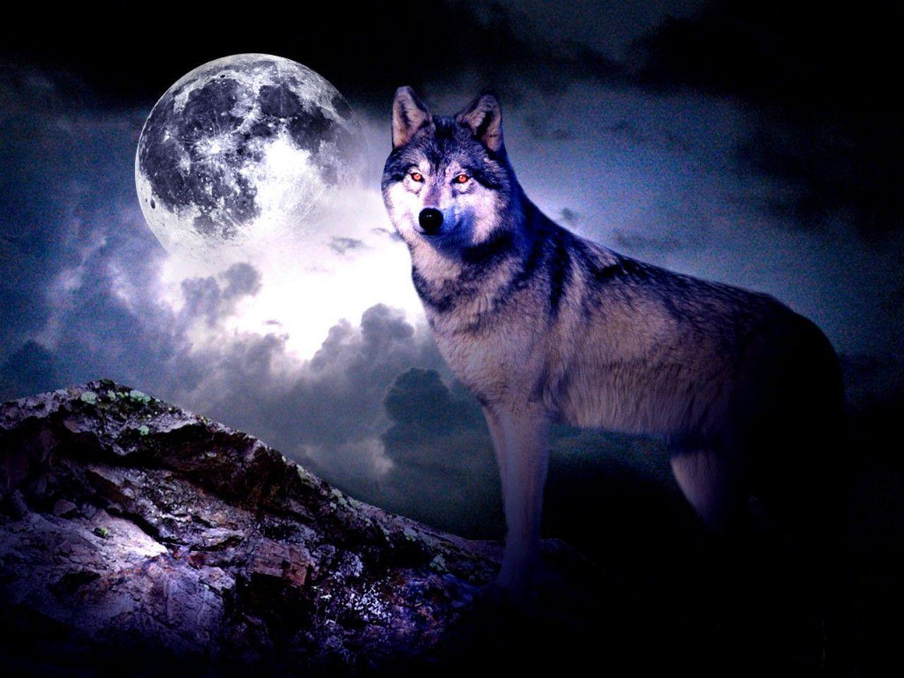 Free Wolf Wallpapers - Wallpaper Cave