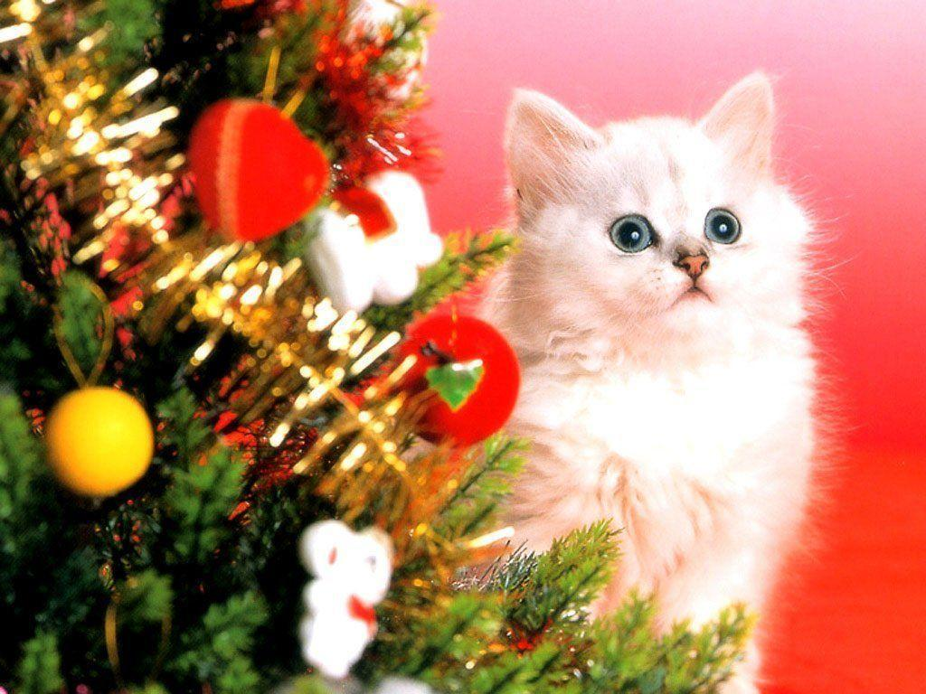 christmas kitten wallpapers wallpaper cave