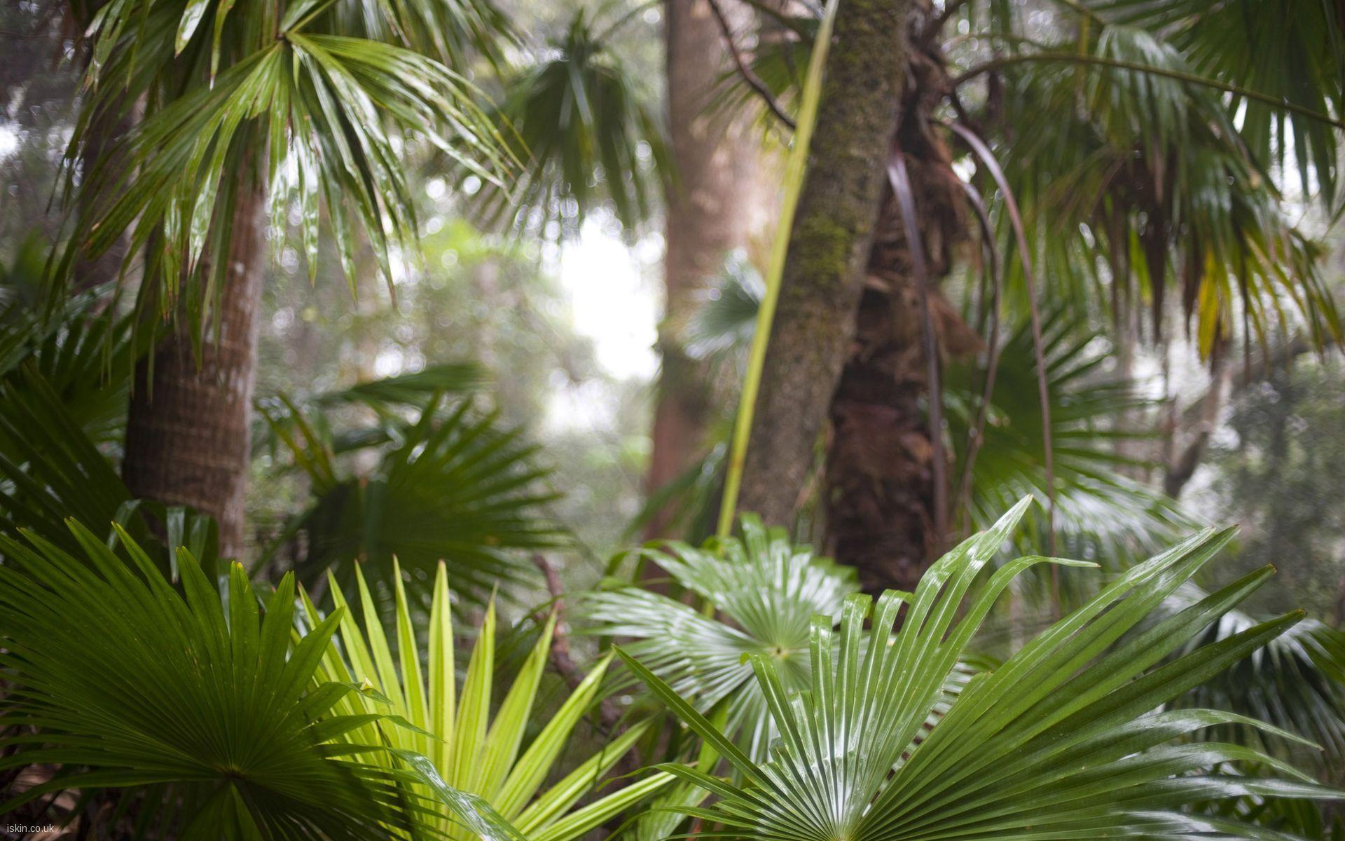 Tropical Rainforest Wa...