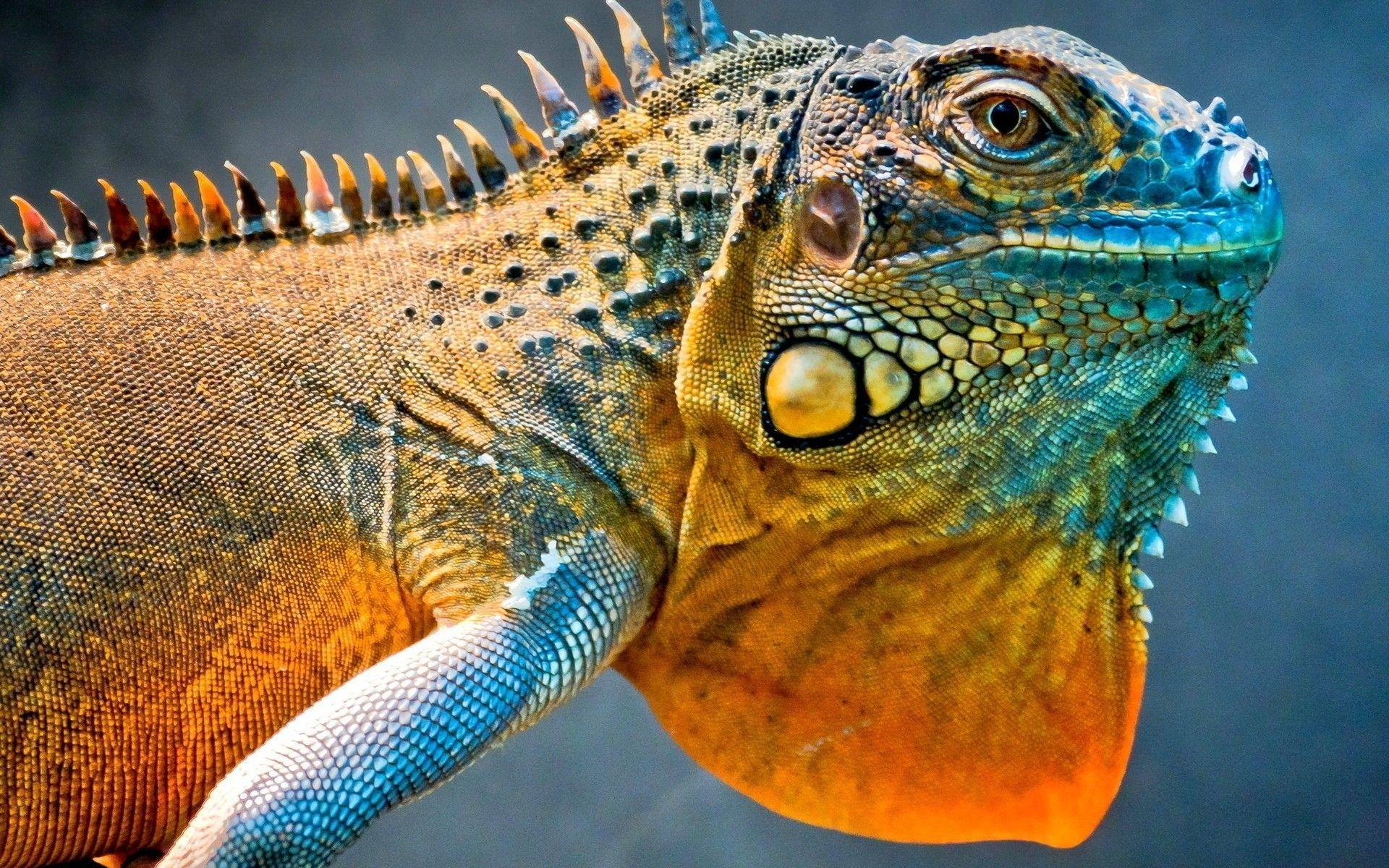 269 Lizard Wallpapers | Lizard Backgrounds Page 3
