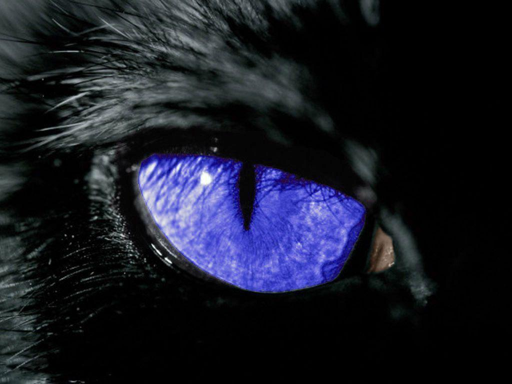 blue eyes wallpaper 2048x1152 - photo #2