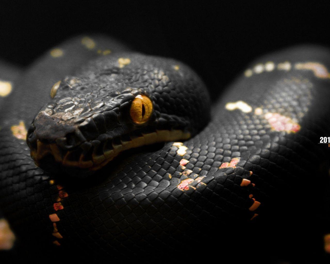 King Snake Hd Pictures Fantastic Snake Wallpaper: Cool Snake Backgrounds