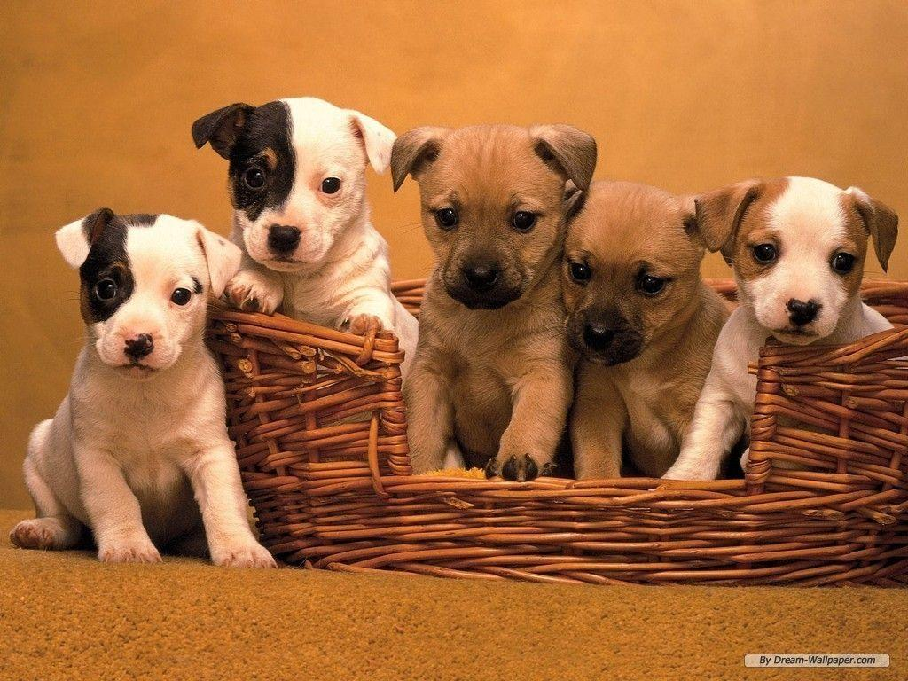 Puppy Wallpaper - Dogs Wallpaper (7013331) - Fanpop