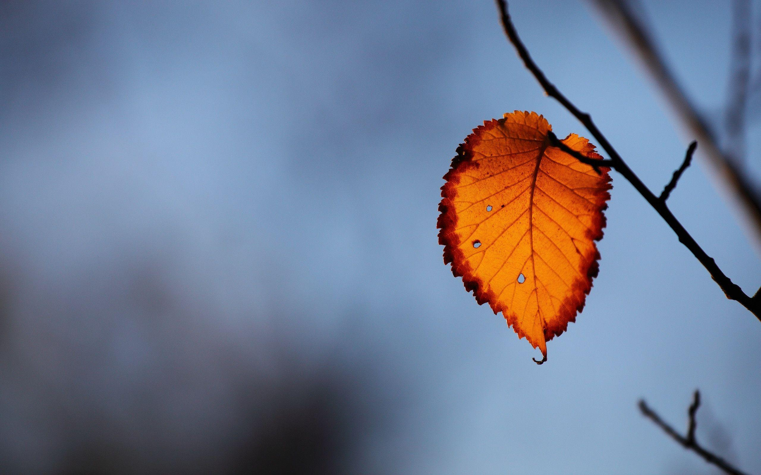 Autumn Leaf Wallpapers - Wallpaper Cave