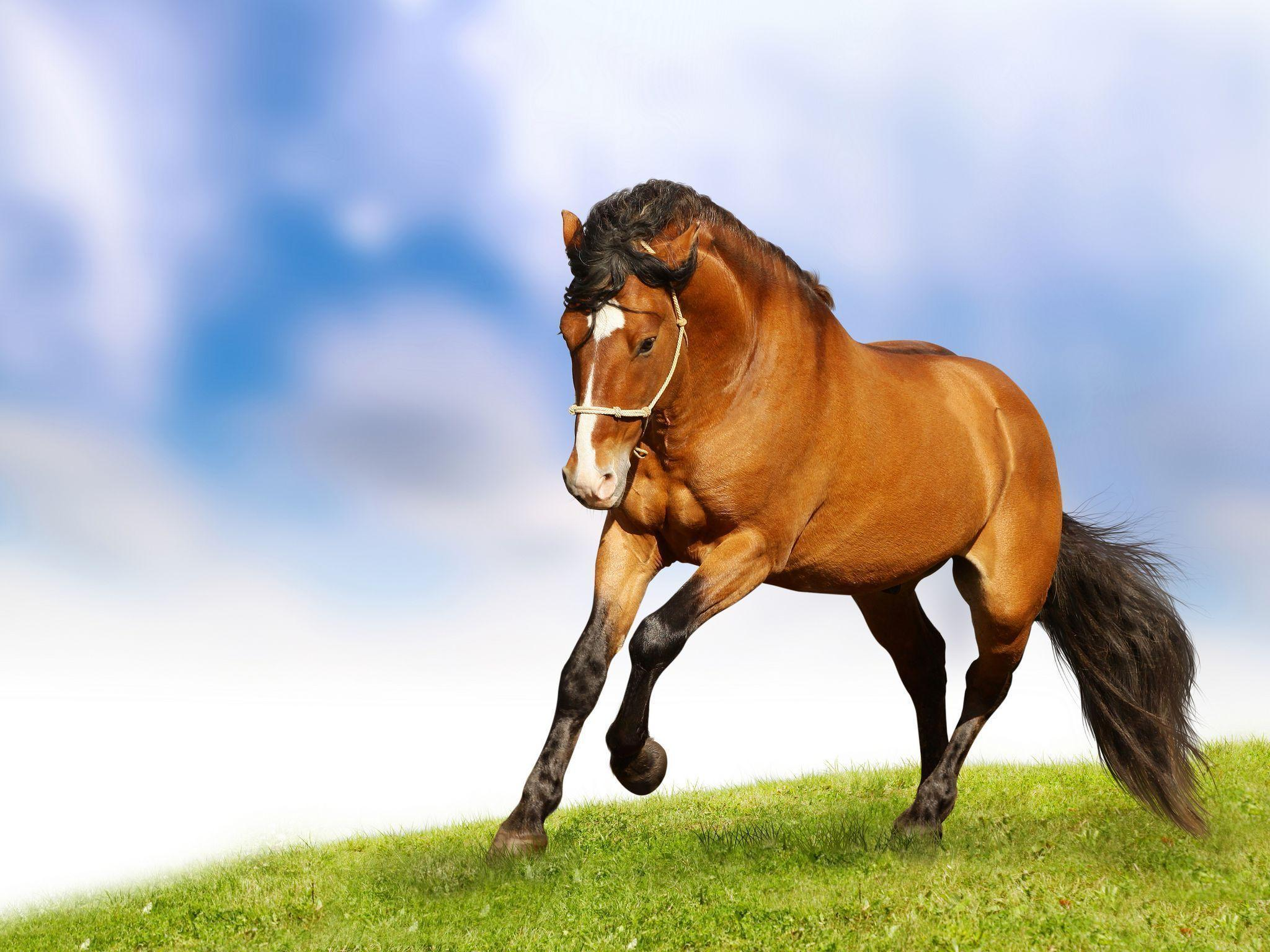 Horse Wallpaper for Home - HD Wallpapers|WallForU.com