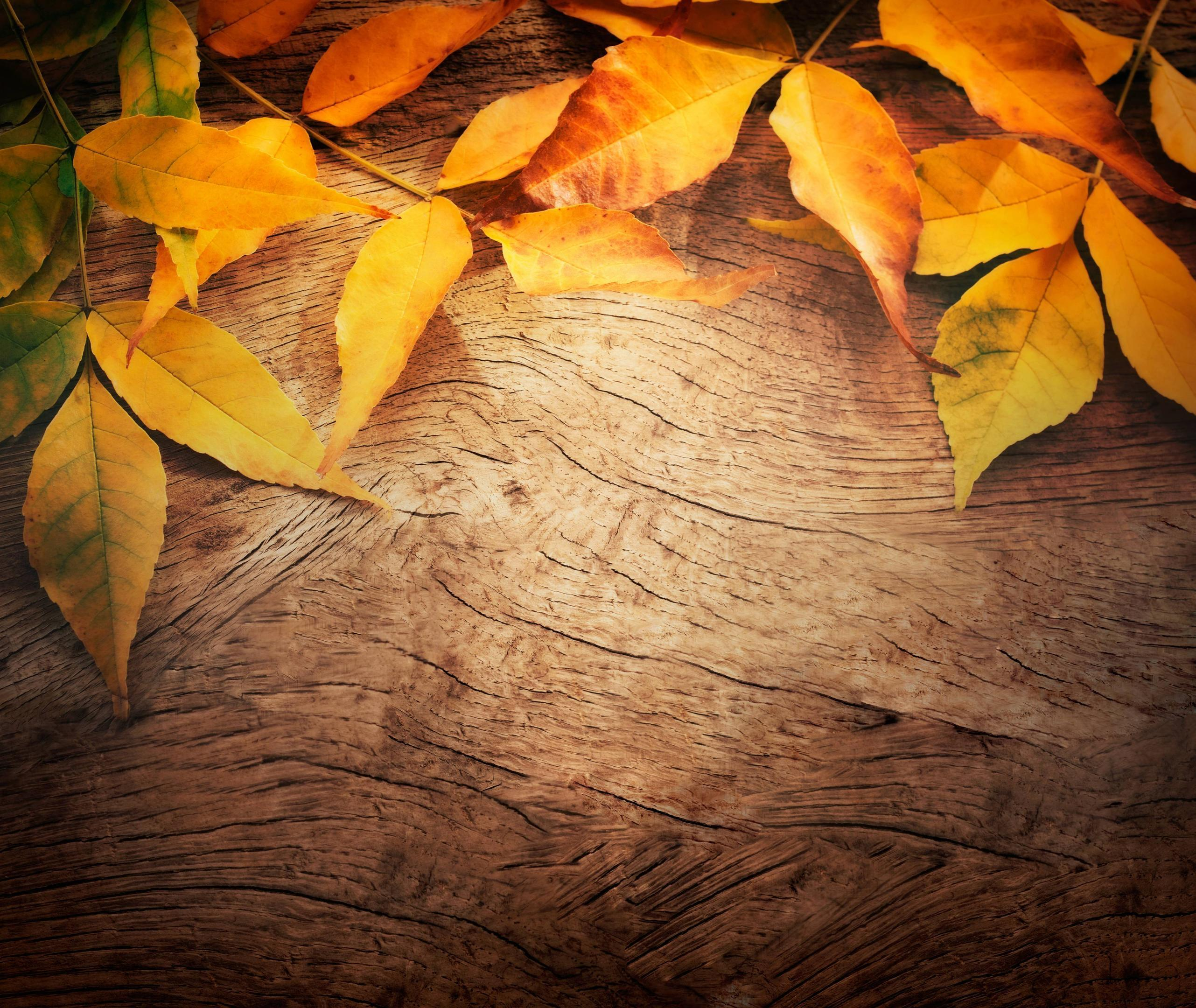 autumn backgrounds pictures wallpaper cave
