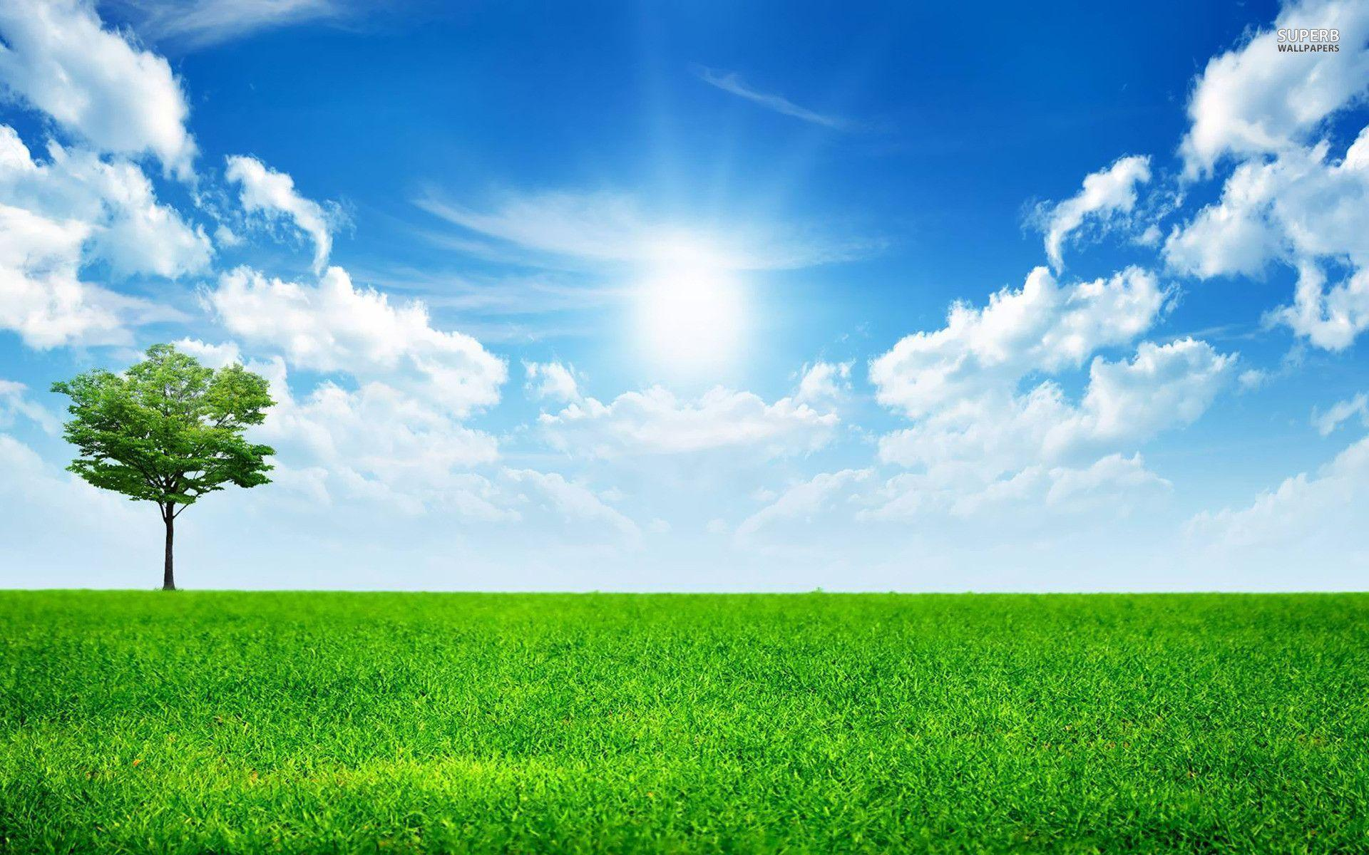 Sunny blue sky wallpapers