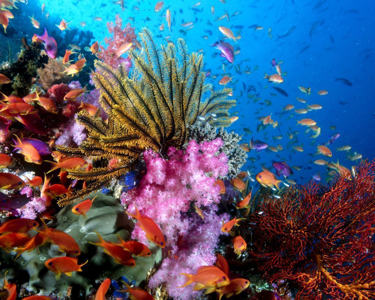 coral reef backgrounds wallpaper cave