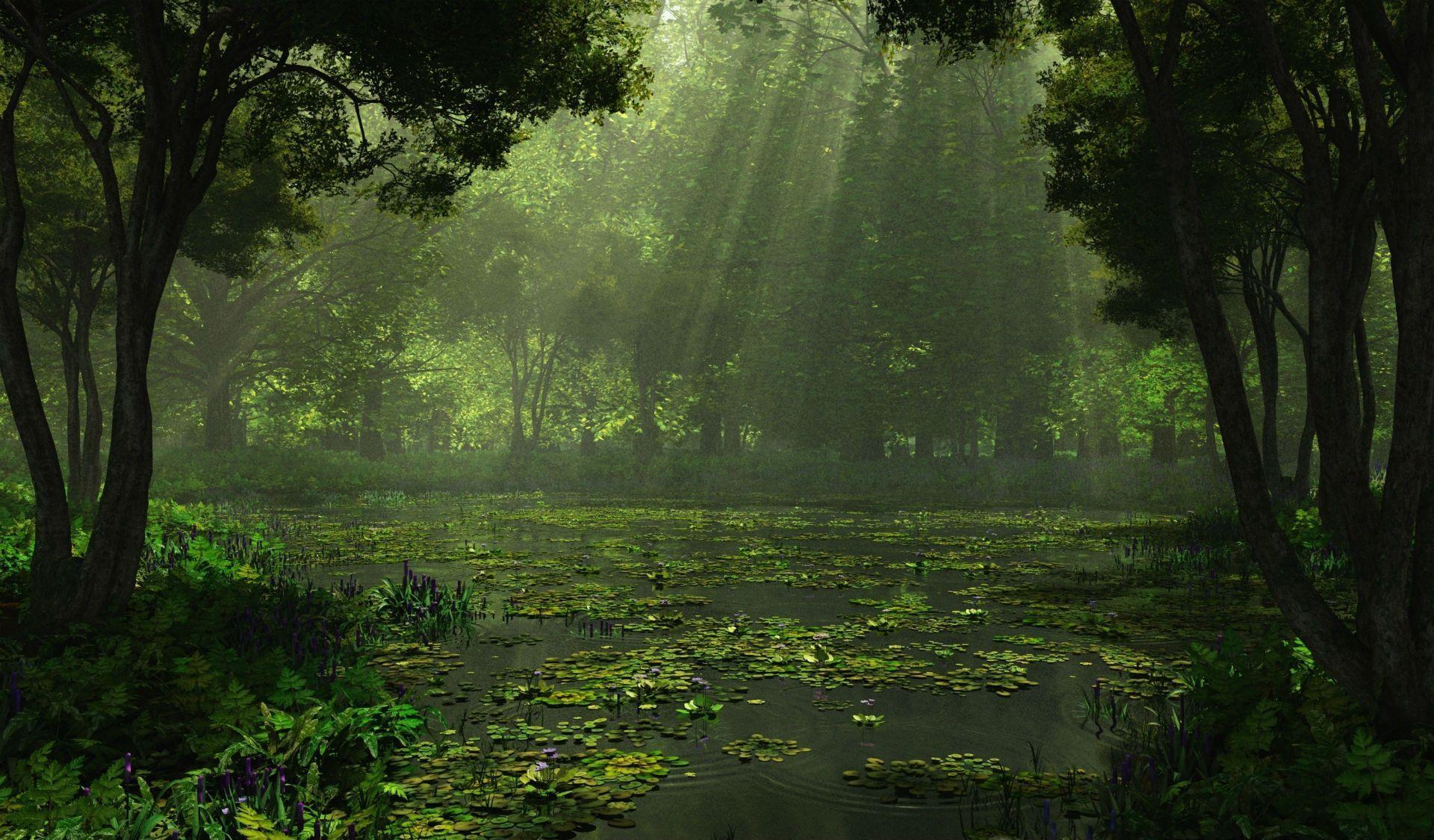 Swamp Backgrounds Wallpaper Cave