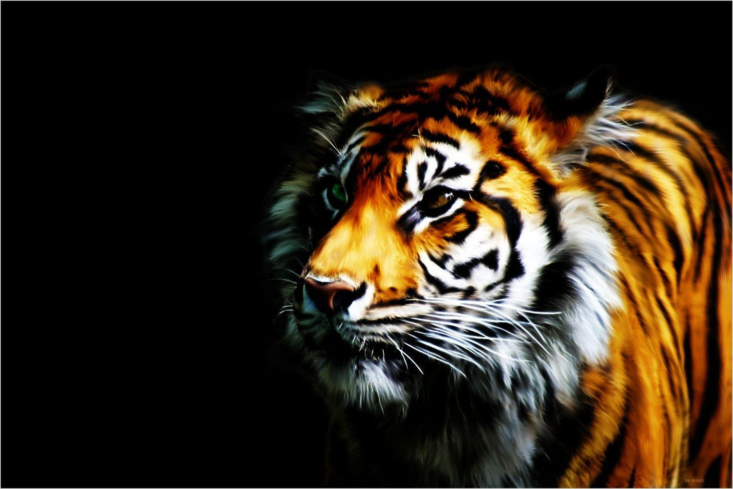 Tiger Wallpaper by Rubenski87 on DeviantArt