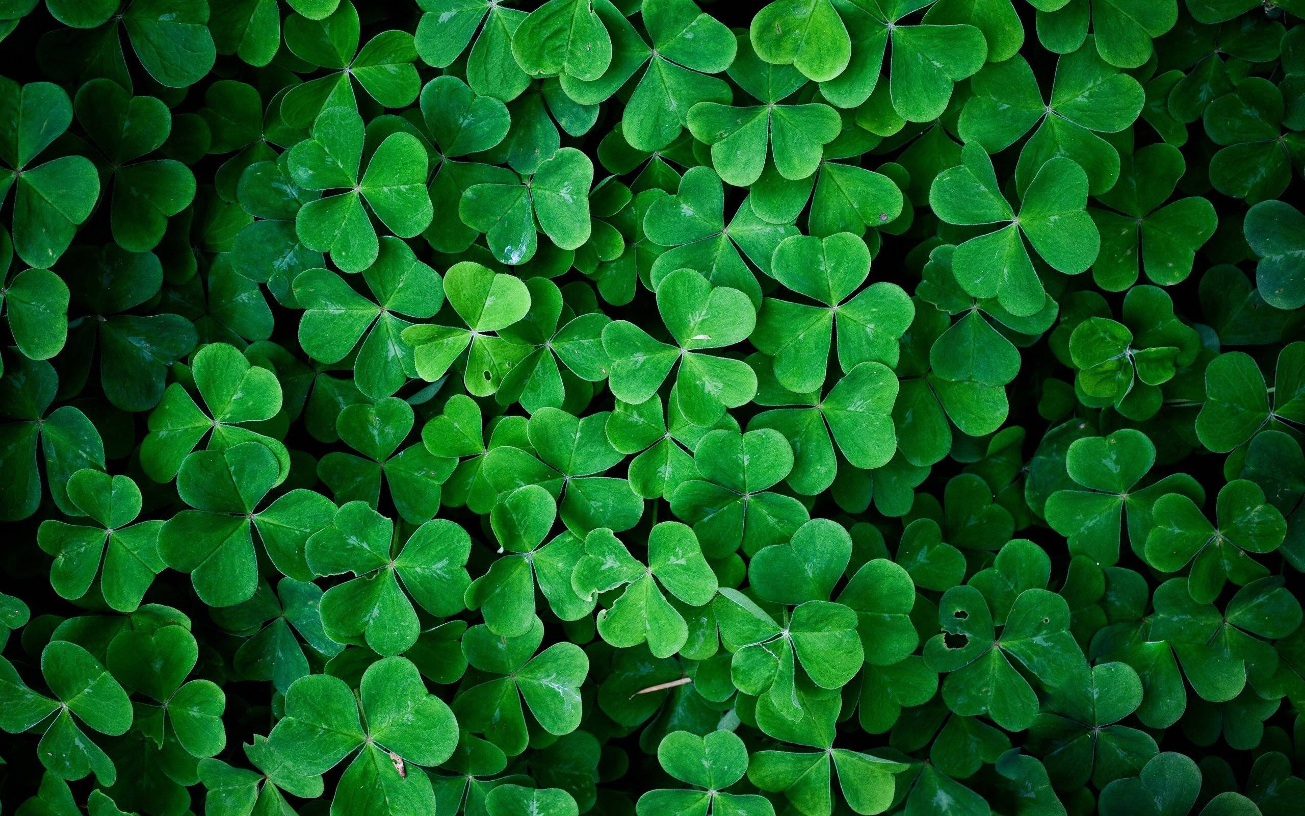 shamrock pattern wallpaper 1366x768 - photo #28