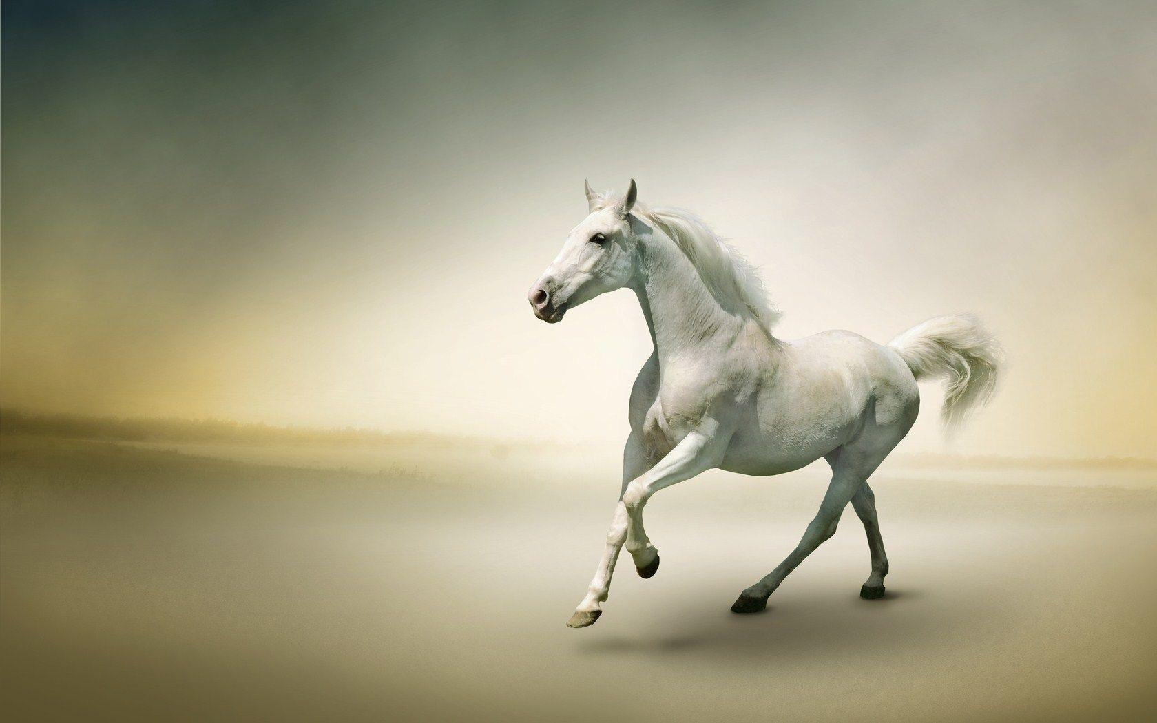 FunMozar – Photo Gallery: Beautiful White Horses