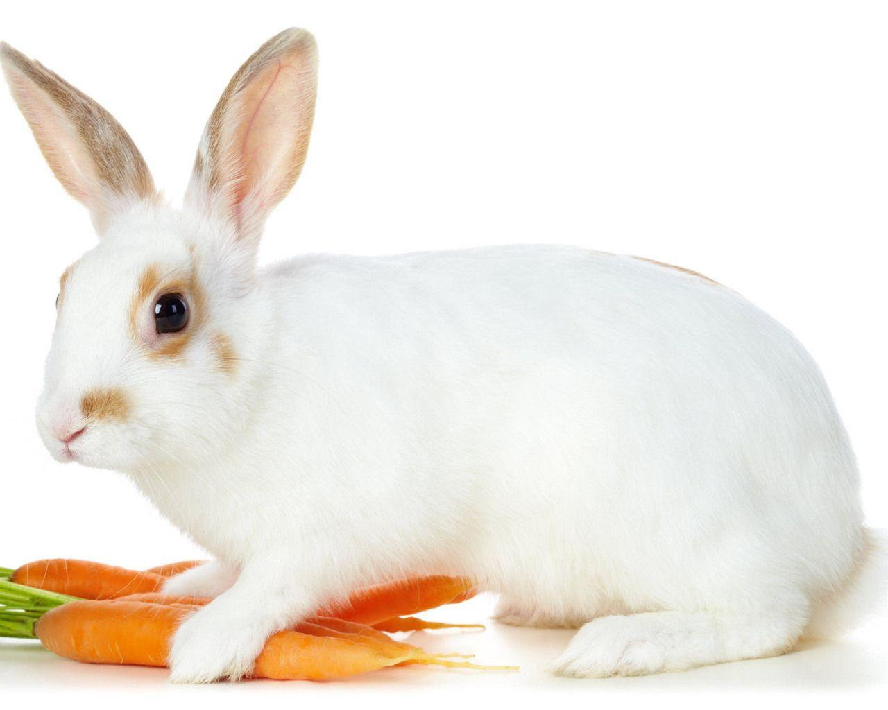 Funny Baby White Rabbit In Grass Stock Photo 167561081 ... |Awesome Baby White Bunnies