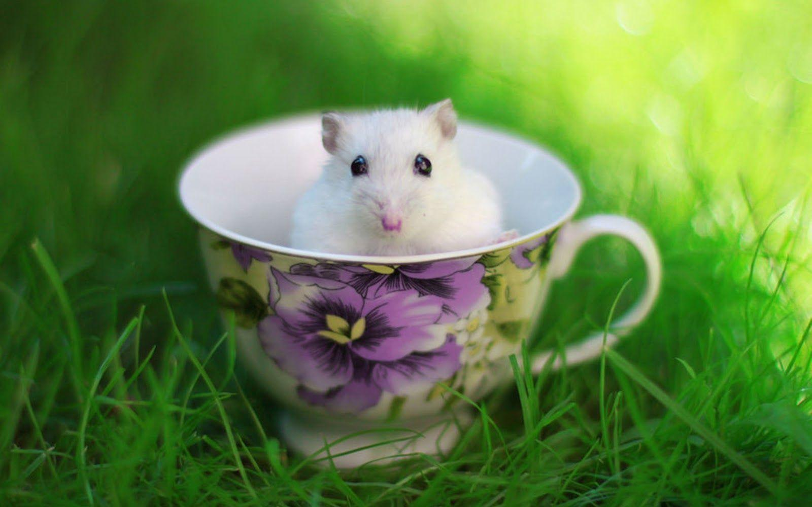 funny hamster wallpapers wallpaper cave