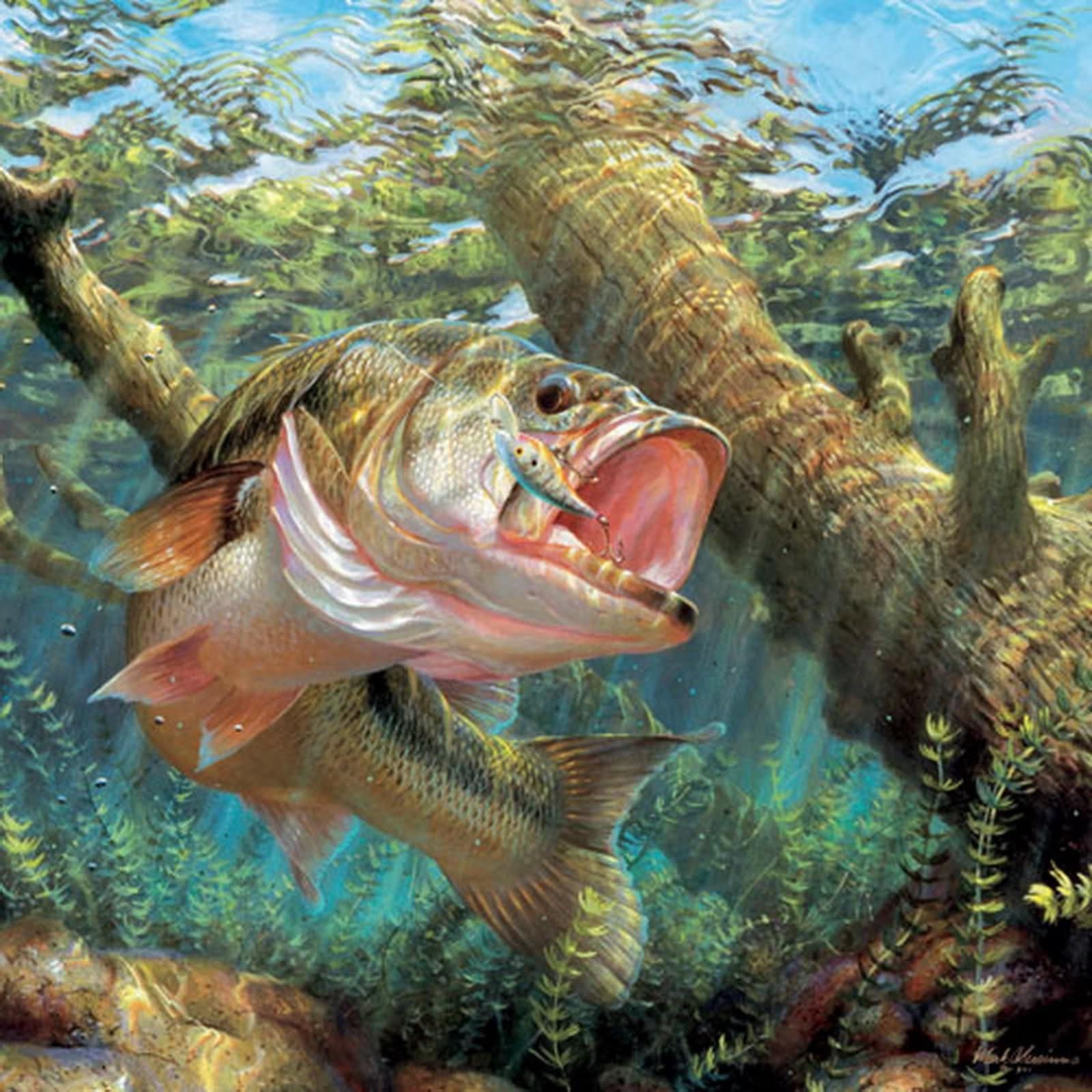 Largemouth bass wallpapers wallpaper cave for Bass fish images