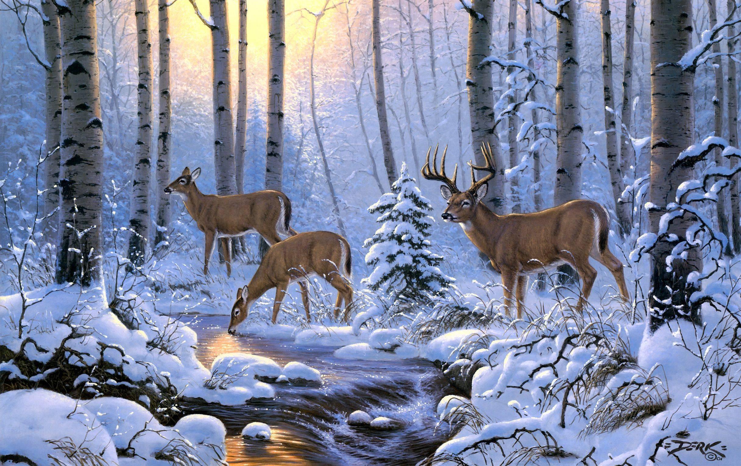 deer wallpaper for my desktop - photo #17