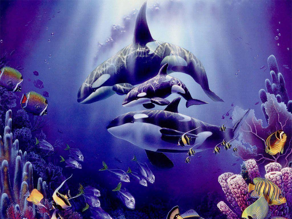 Beautifull Purple Orca Wallpaper High Resoluti #5219 Wallpaper ...