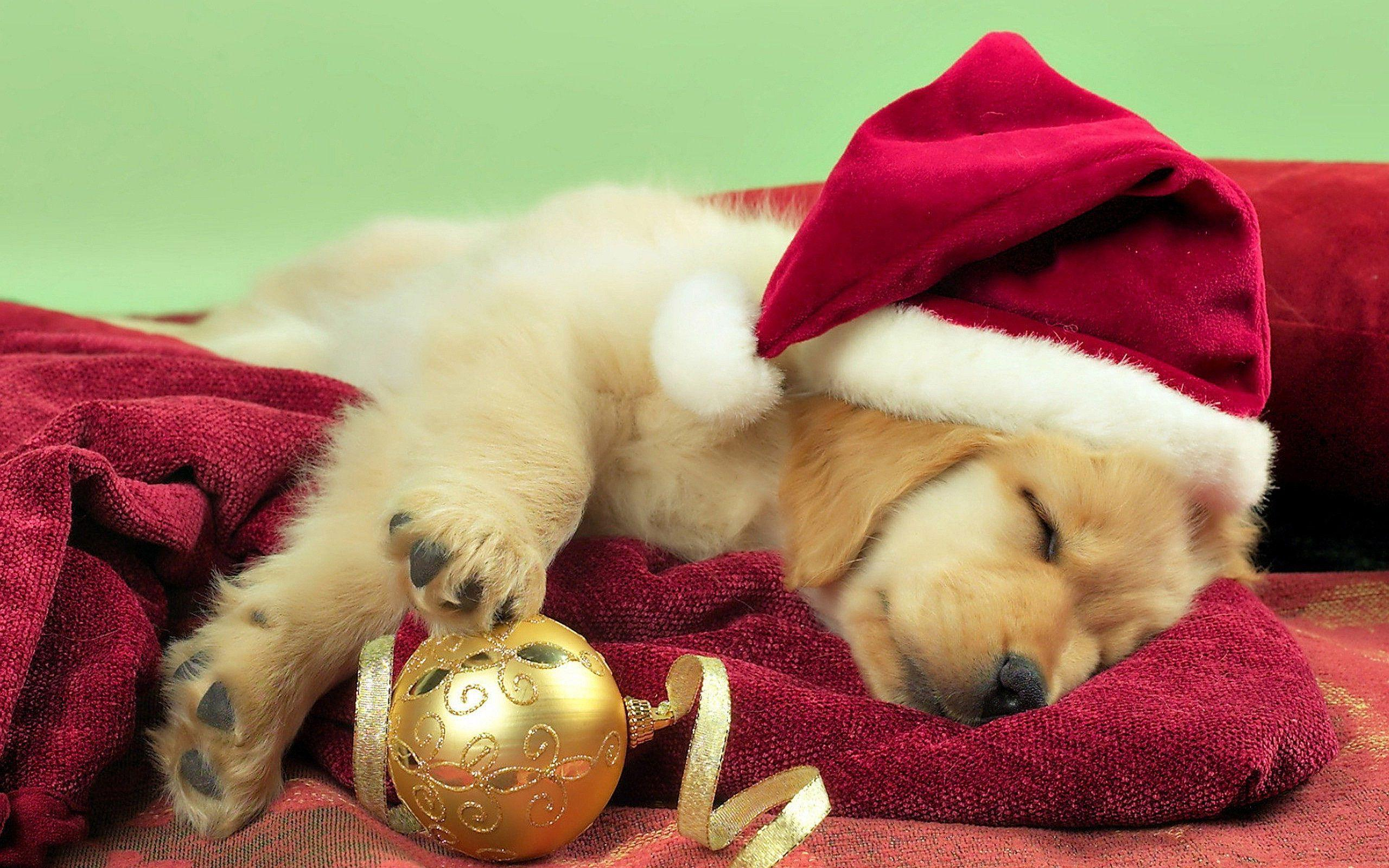 Free Christmas Puppies Wallpapers