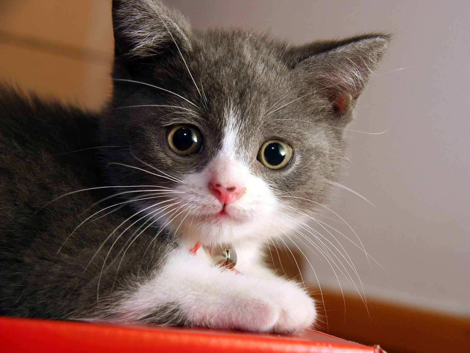 Download Beautiful Cute Cat Wallpapers
