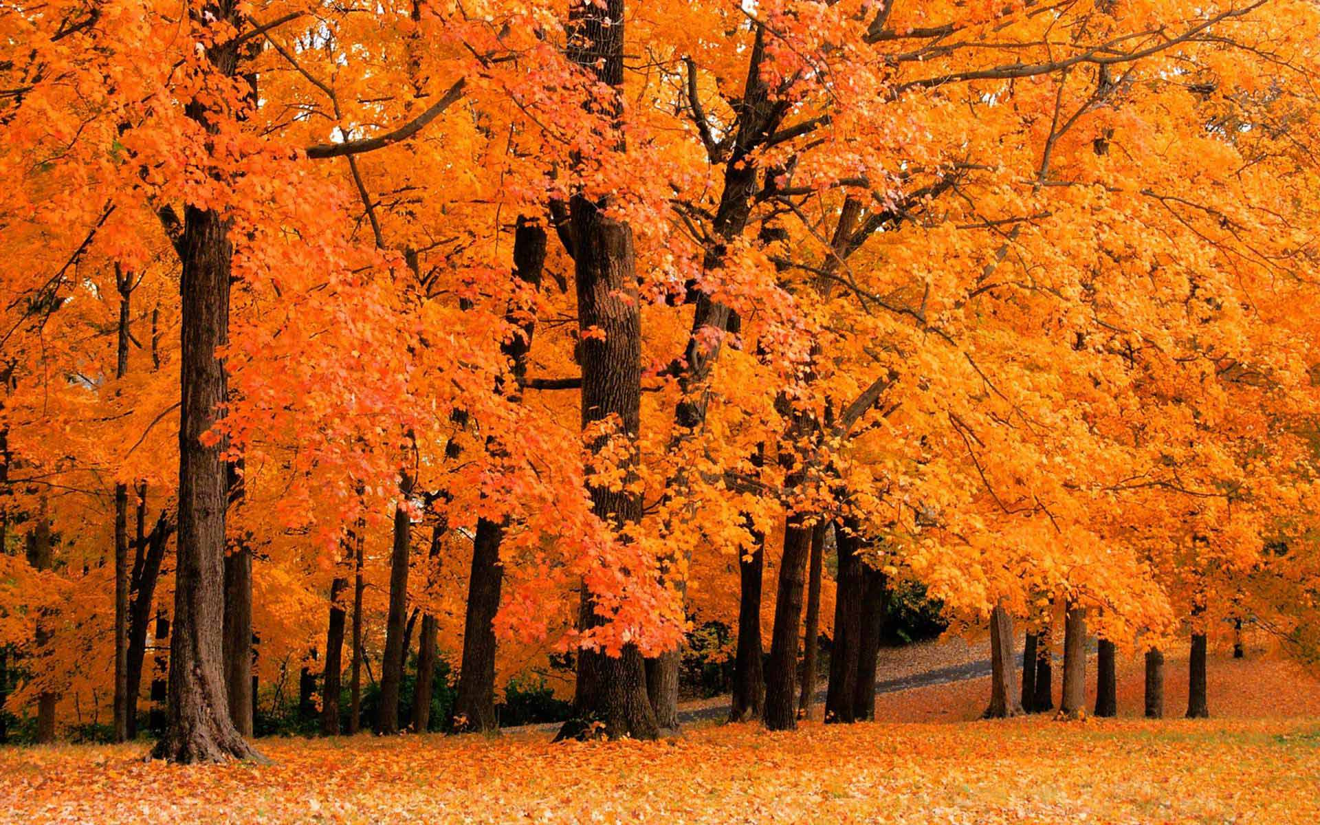 fall foliage wallpapers for desktop wallpaper cave