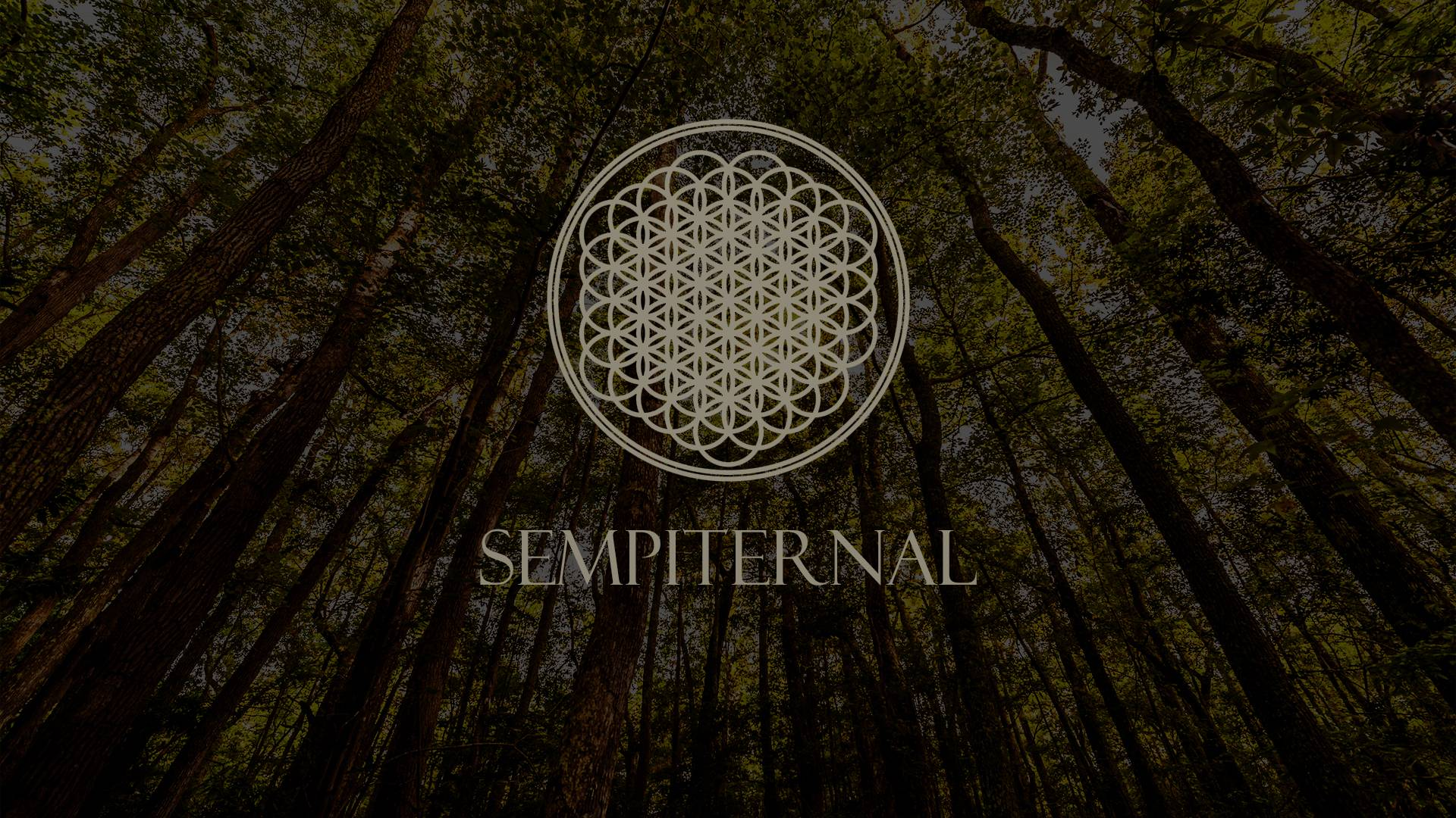 bmth wallpaper2 - photo #5