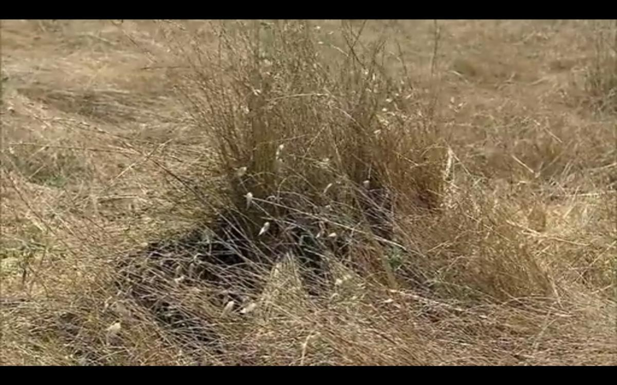Images For > Snipers In Ghillie Suits Hiding