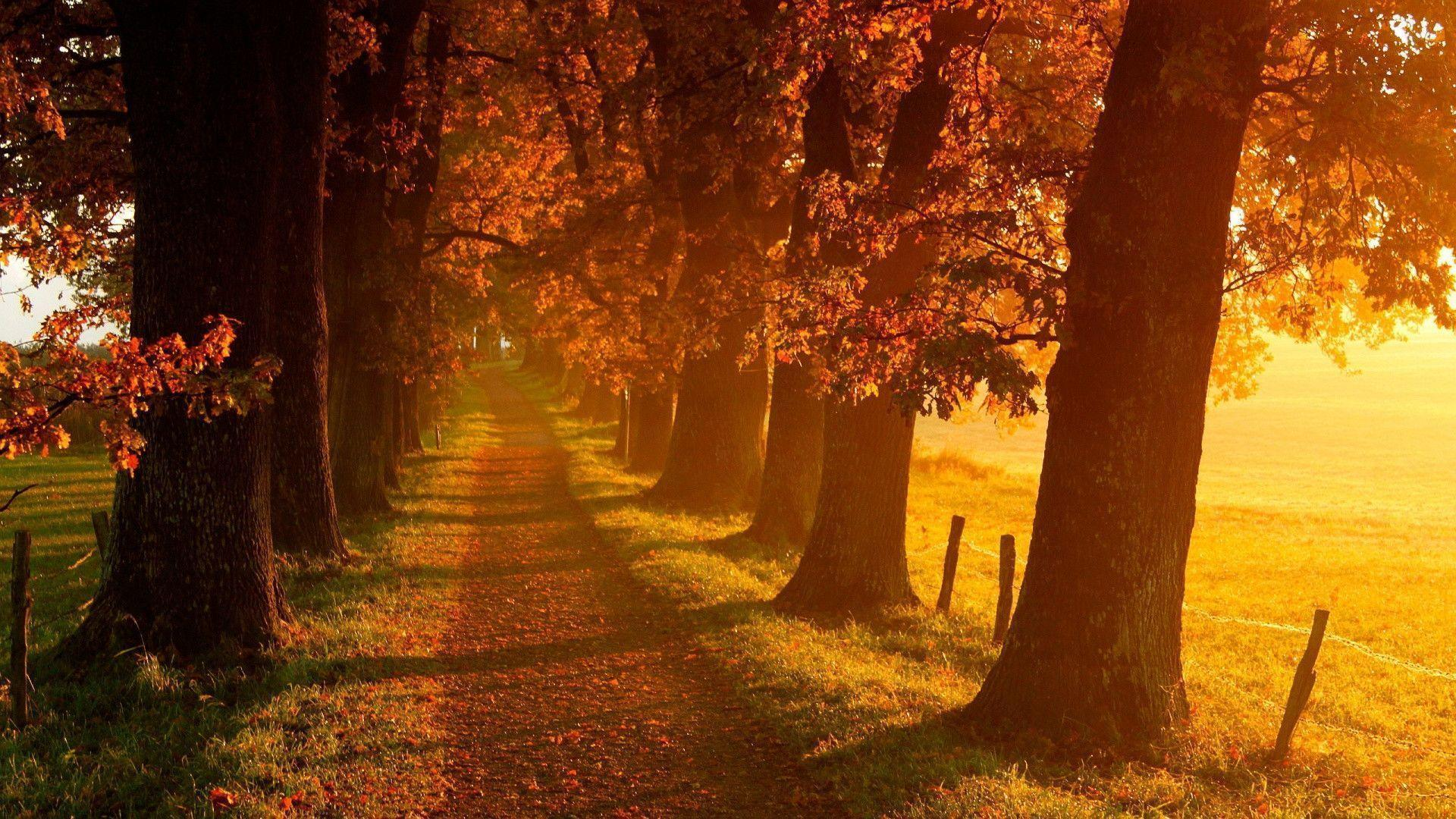 1920x1080 Autumn Landscape Scenery Wallpaper