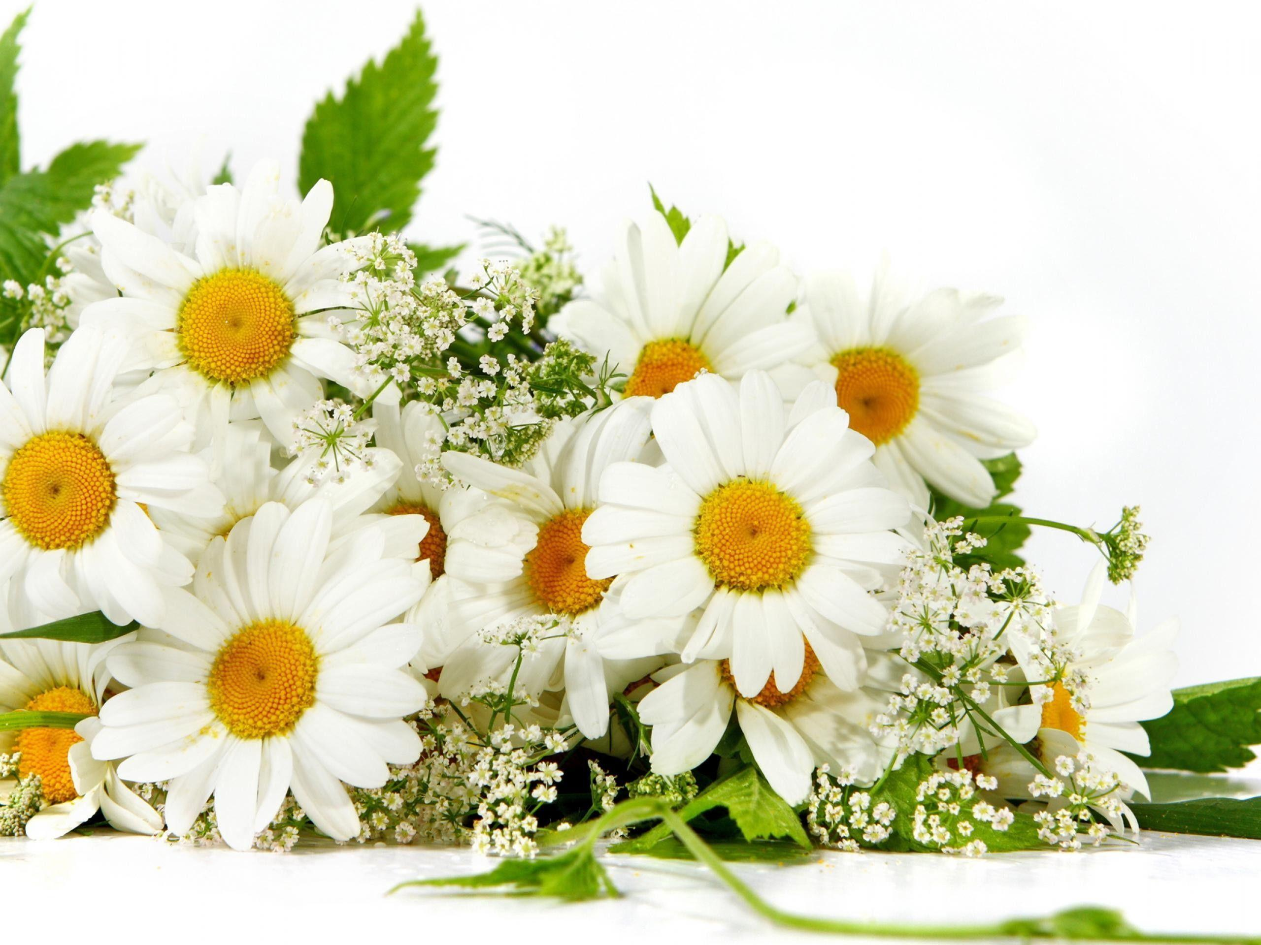 The Image of Nature Flowers Daisy Bouquet White Flowers 2560x1920