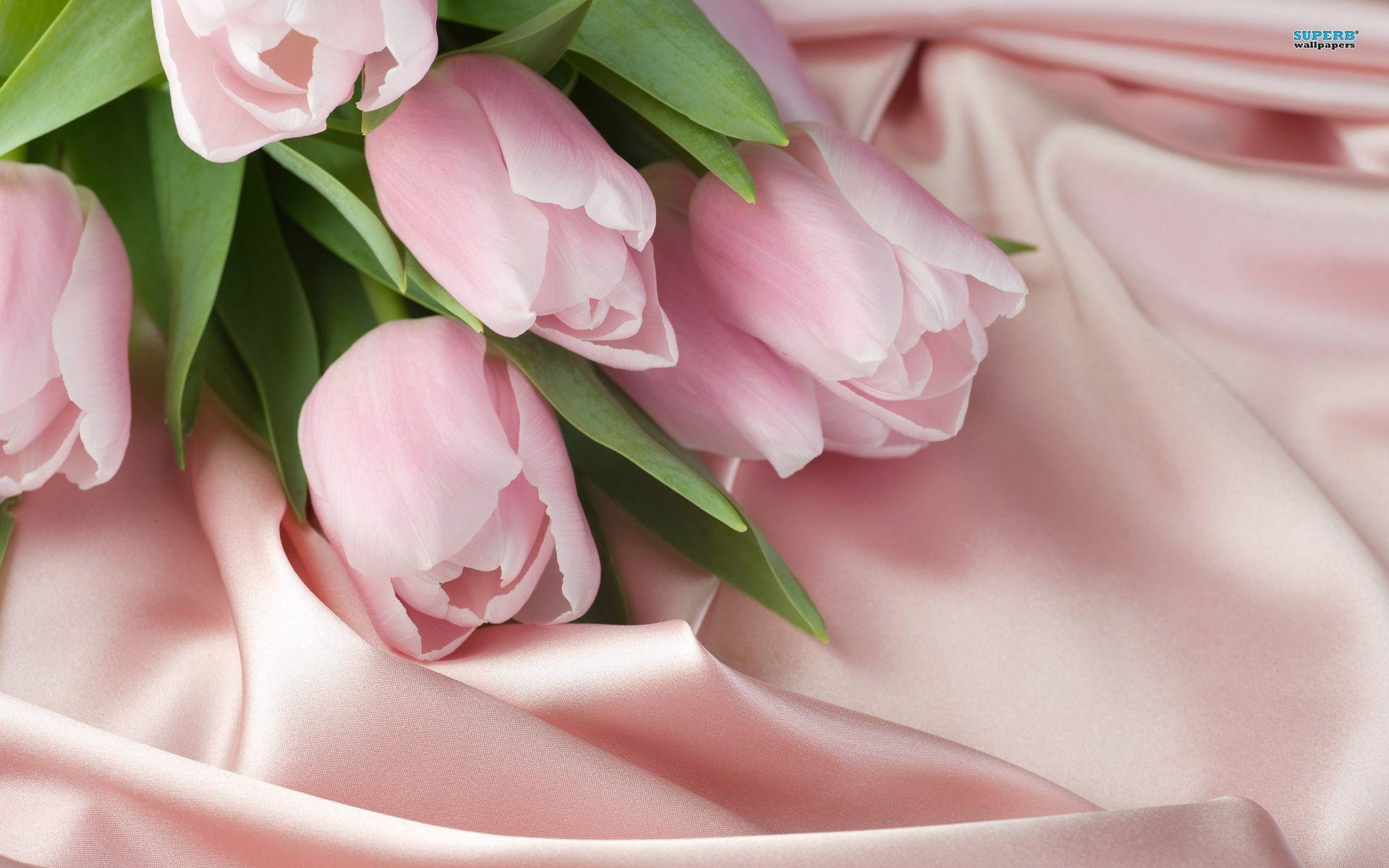 Wallpapers For Purple And Pink Tulips Wallpaper