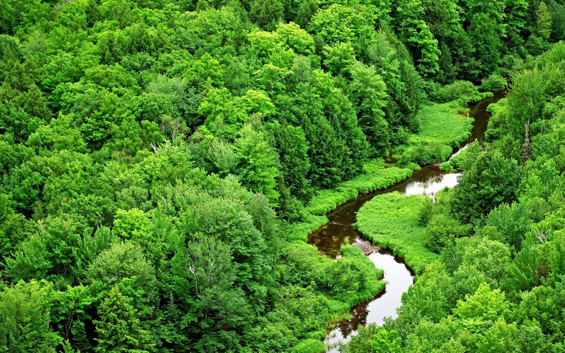 Моменты из жизни крафтеров и все ,что связанно с лесом )