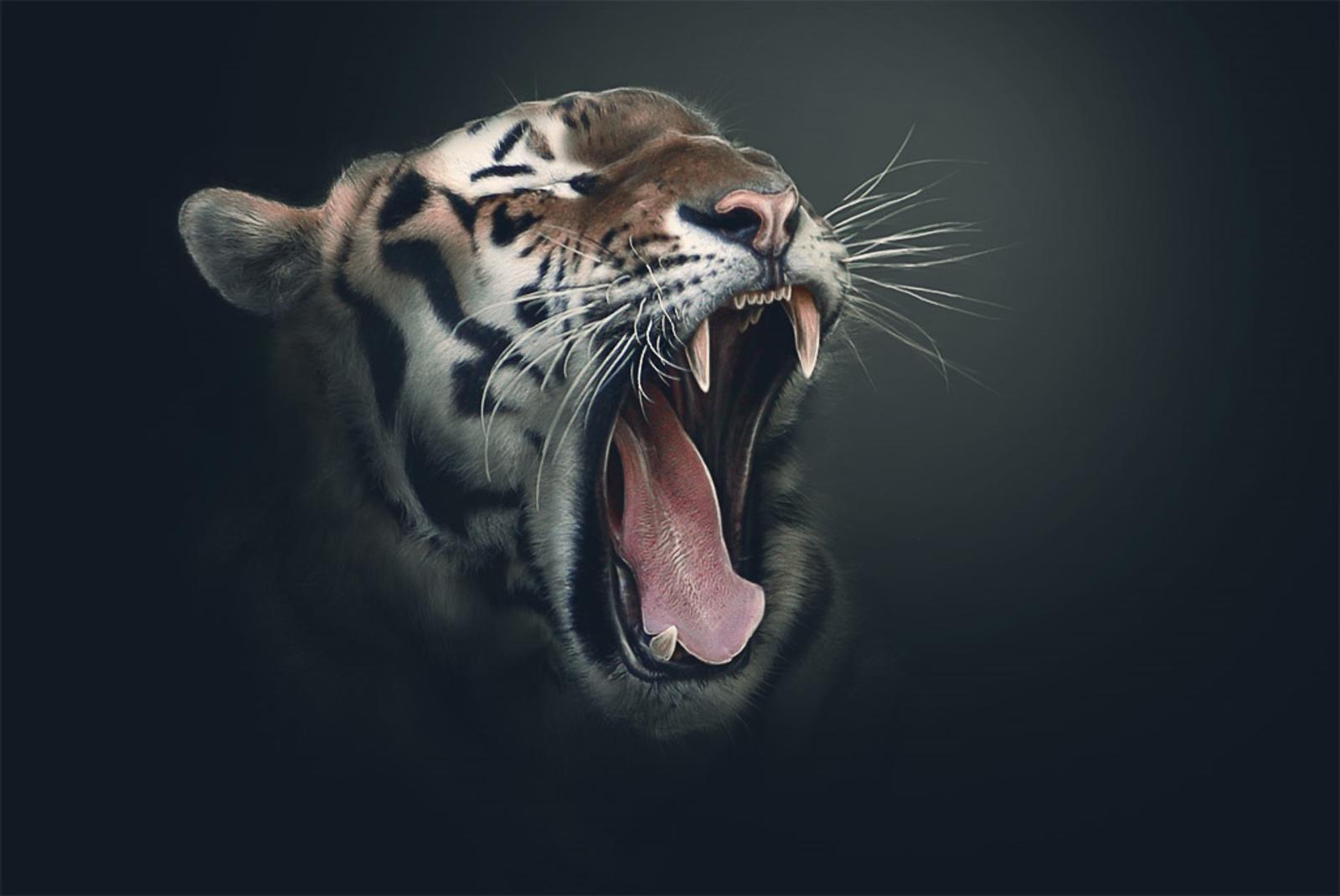 Free Tiger Wallpapers For Desktop - Wallpaper Cave