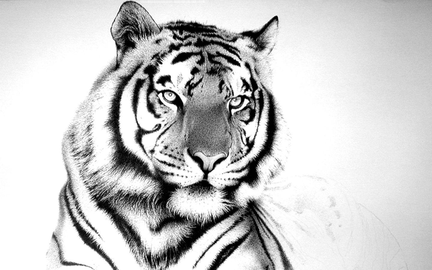 wallpaper hd white tiger - photo #9