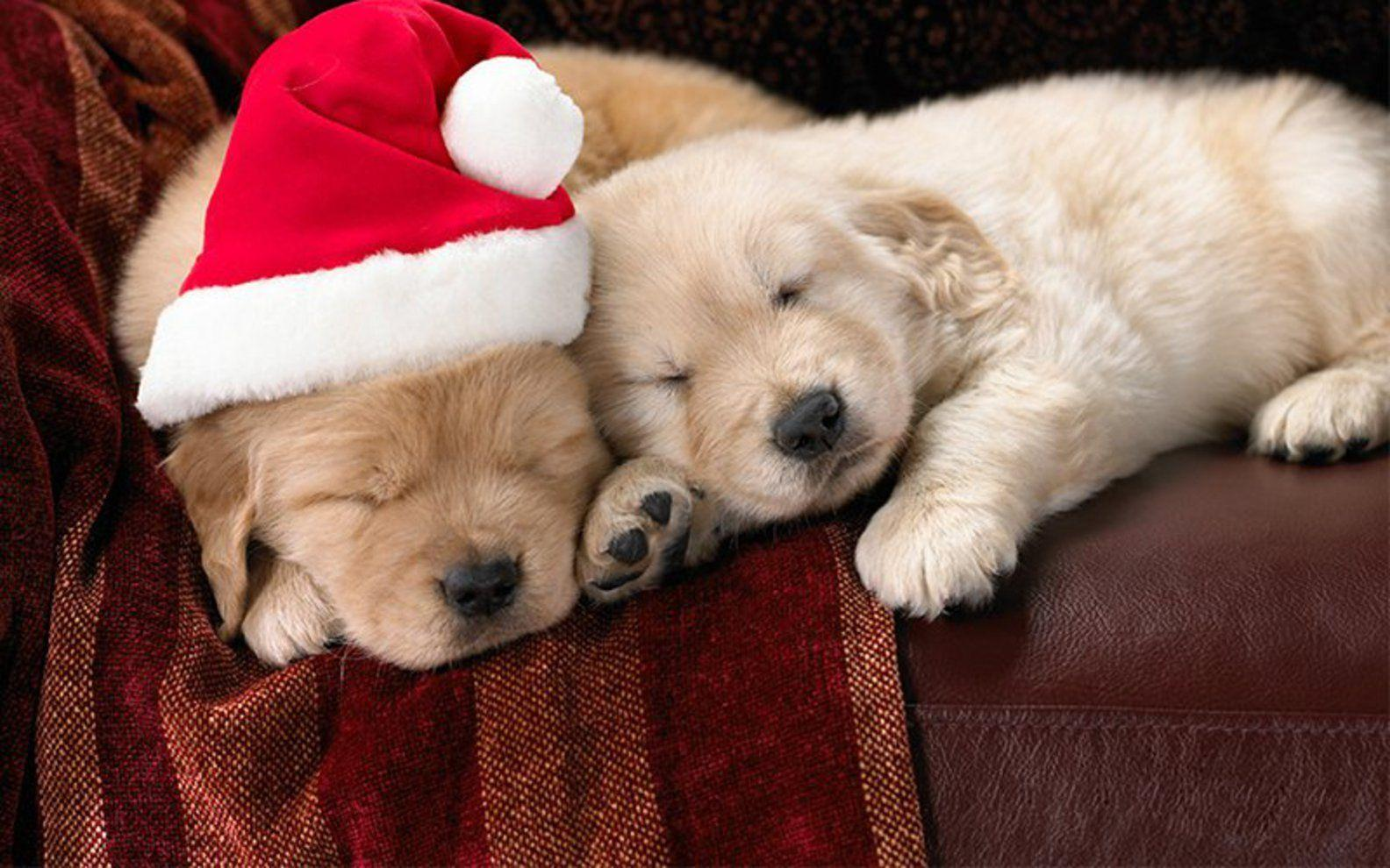 Free Cute Little Christmas Puppies wallpapers Wallpapers