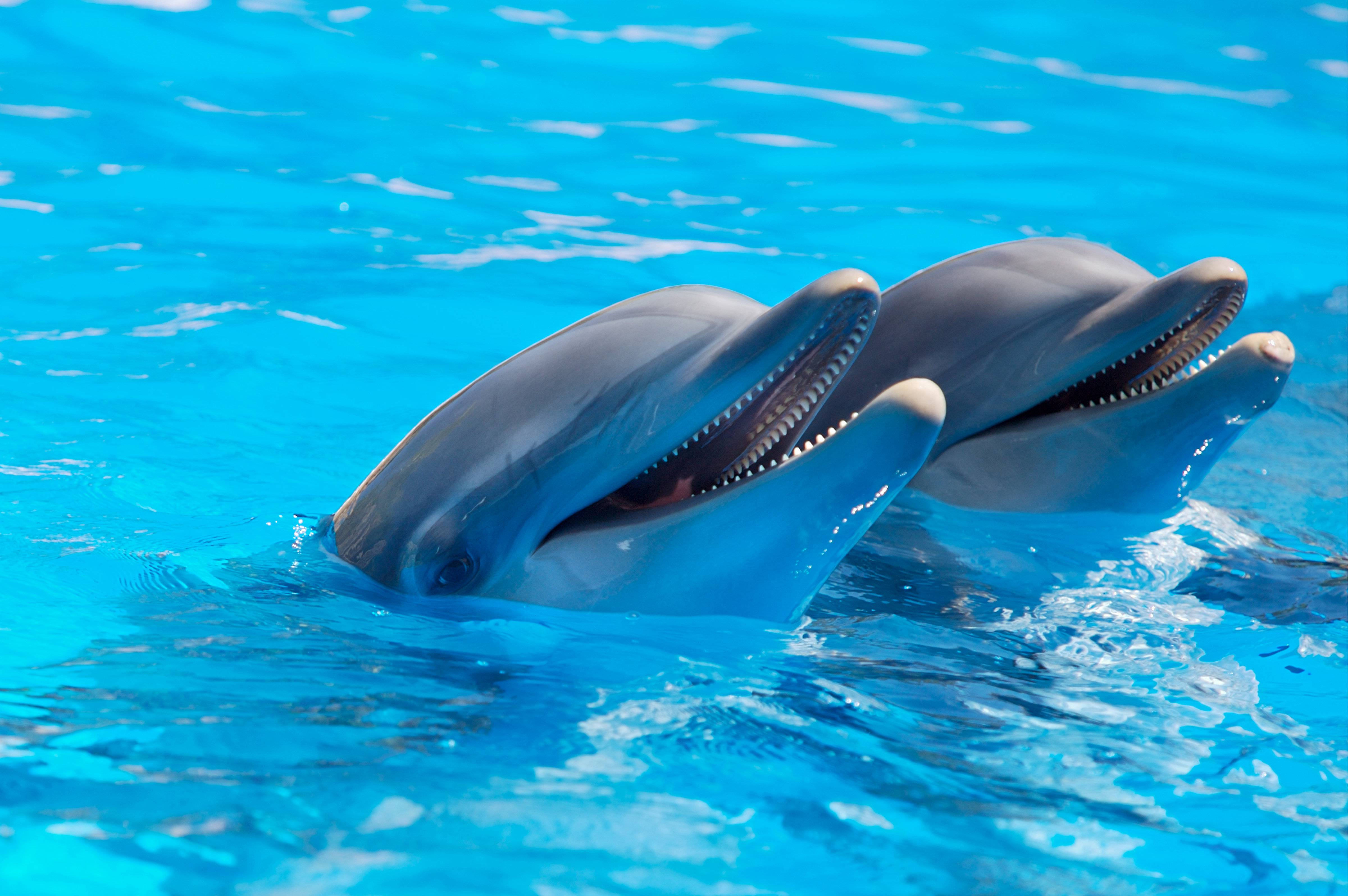 171 Dolphin Wallpapers | Dolphin Backgrounds Page 3
