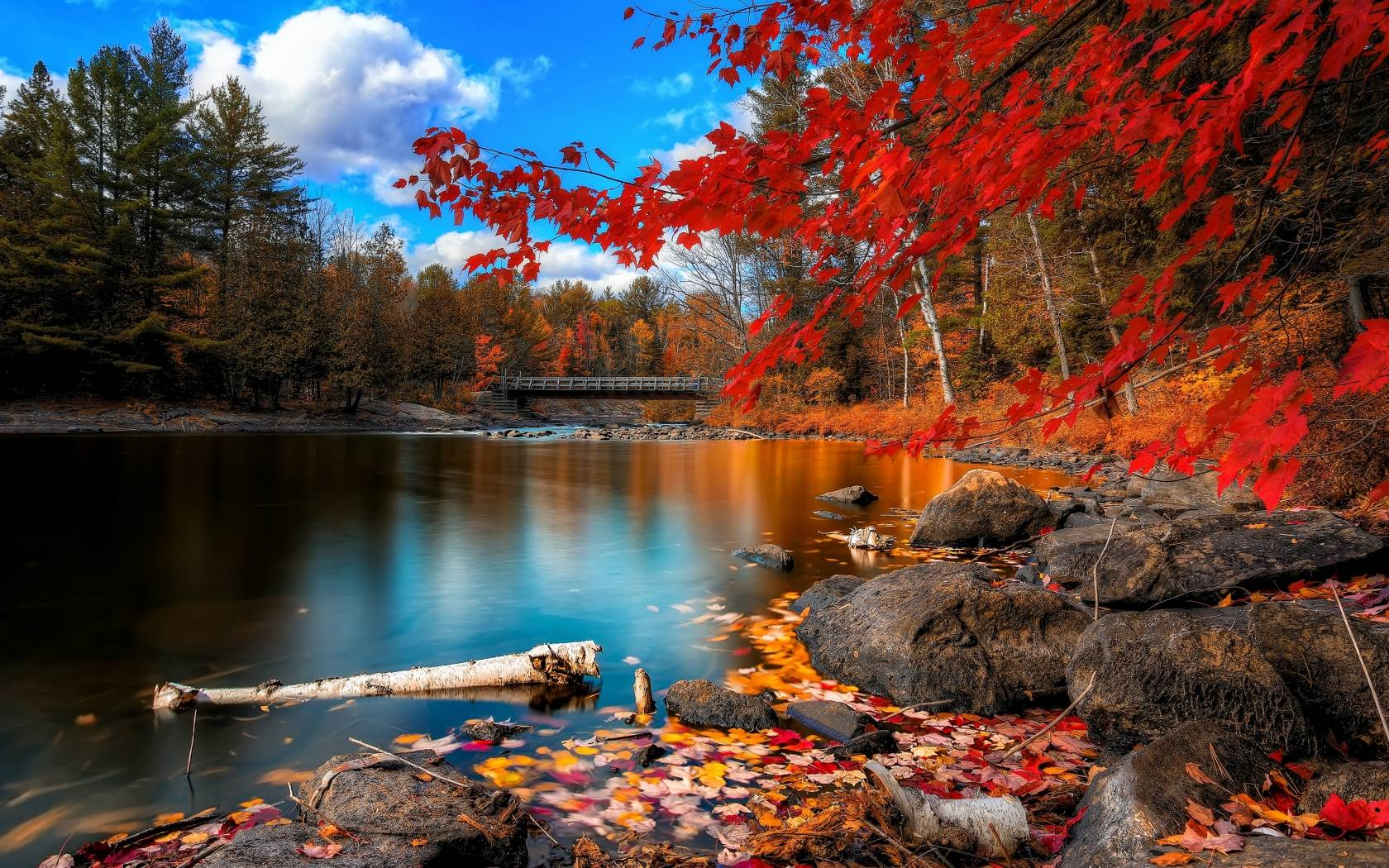 Download Bright Fall Scenery Wide Wallpaper