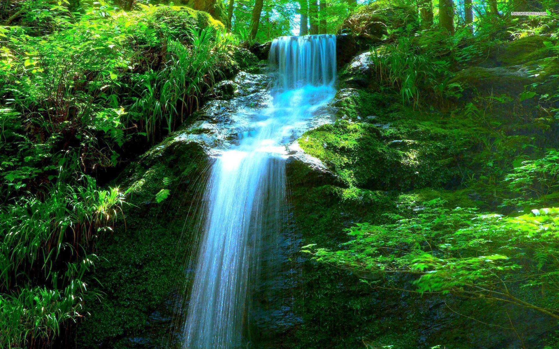 forest waterfall wallpapers wallpaper cave