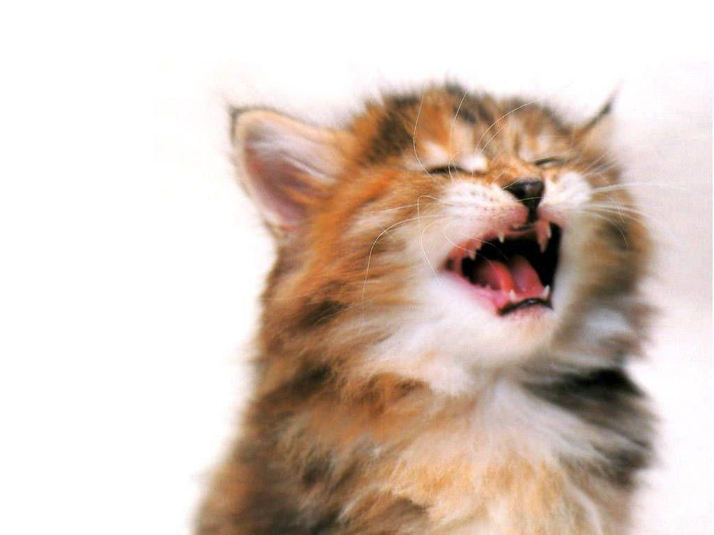 funny kittens wallpapers - photo #25