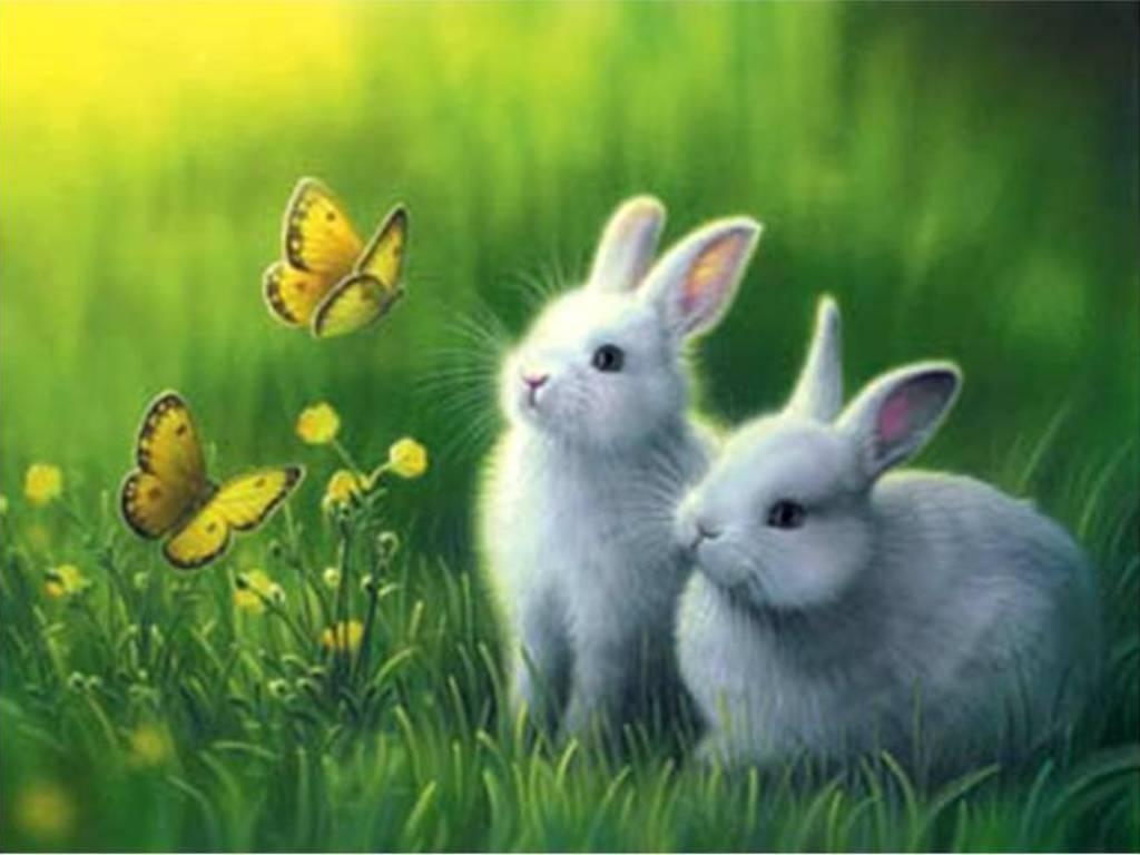 bunnies wallpapers wallpaper cave