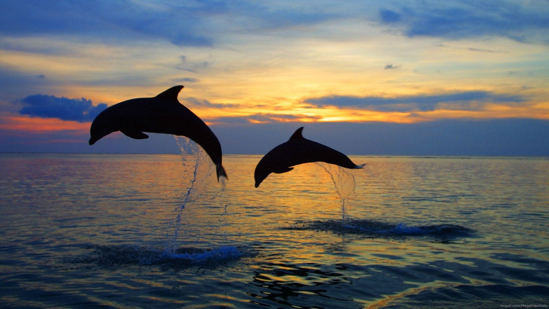 Dolphin Wallpaper 1 For Background HD | wallpaperhd77.com
