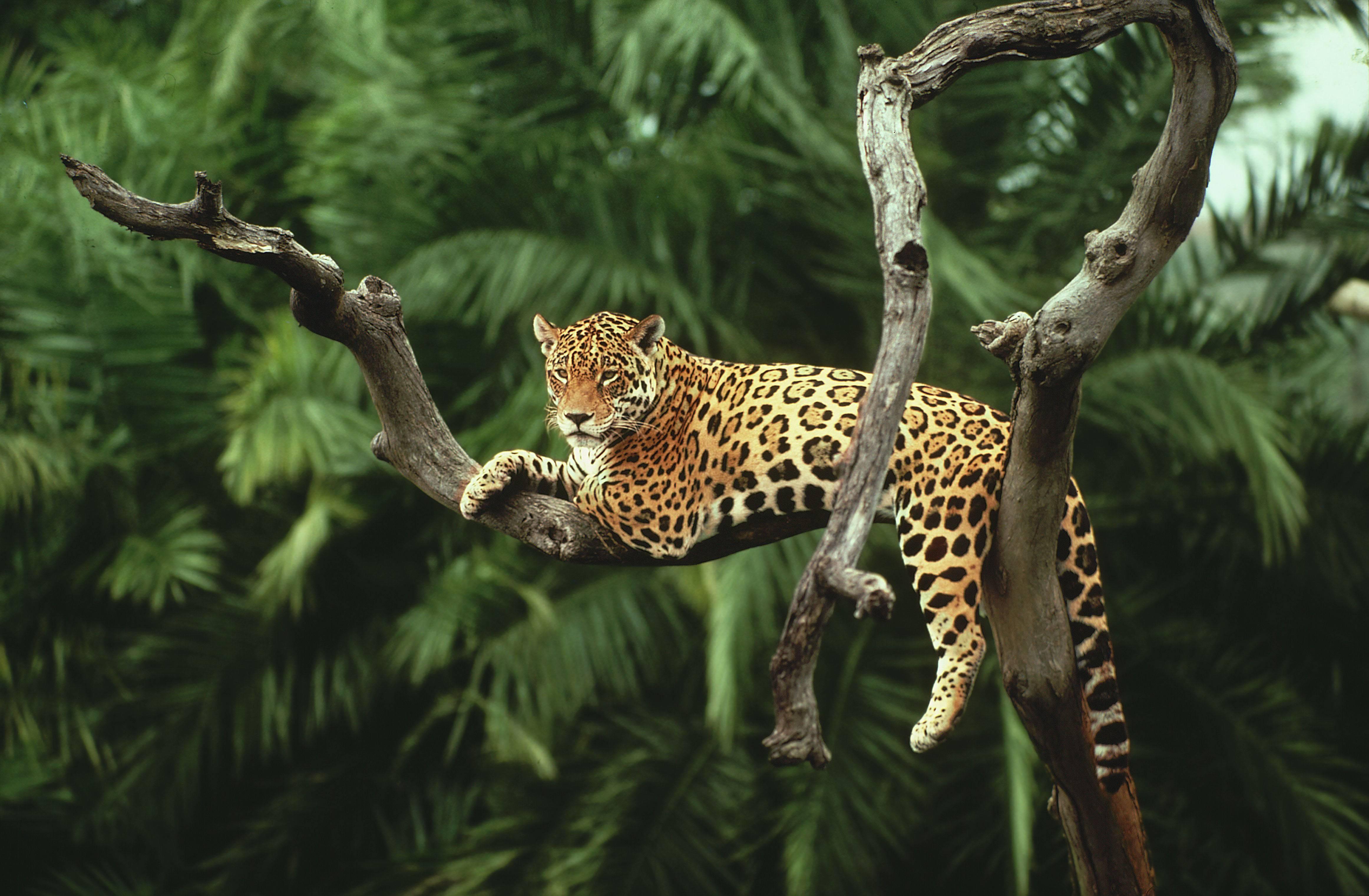Животные тропиков фото 2