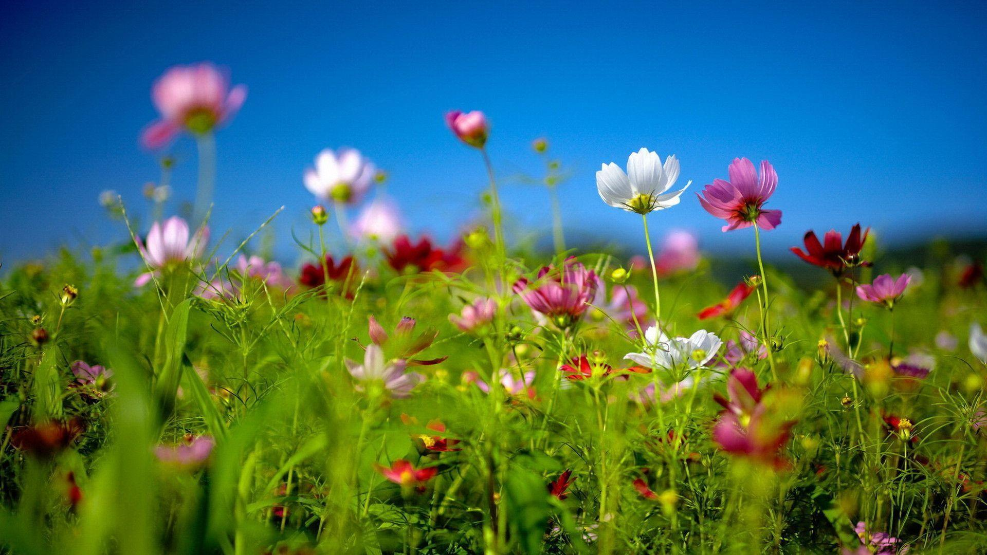 spring wildflowers best hd windows 8 theme download free windows