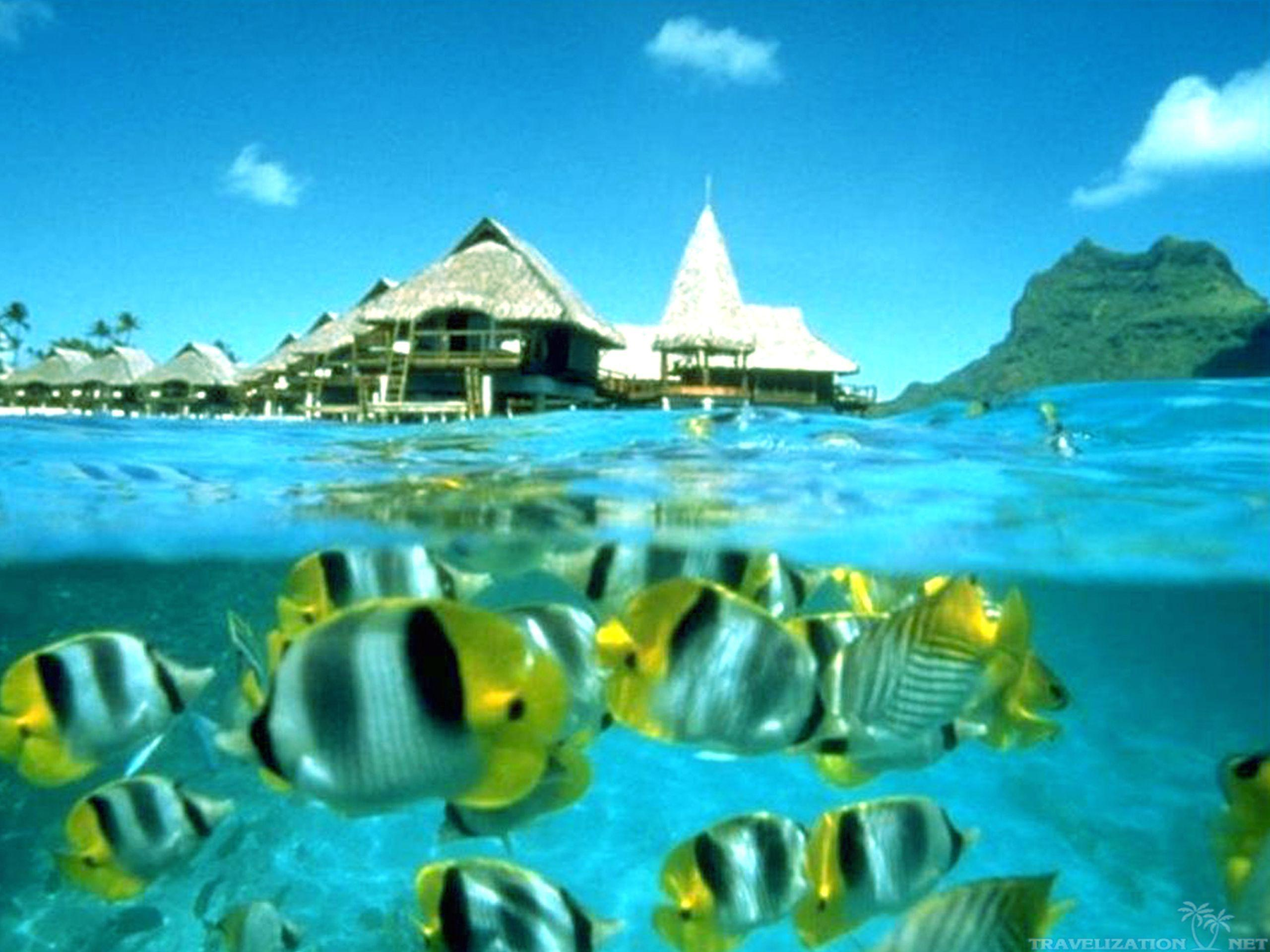 Hd Tropical Island Beach Paradise Wallpapers And Backgrounds: Tahiti Wallpapers
