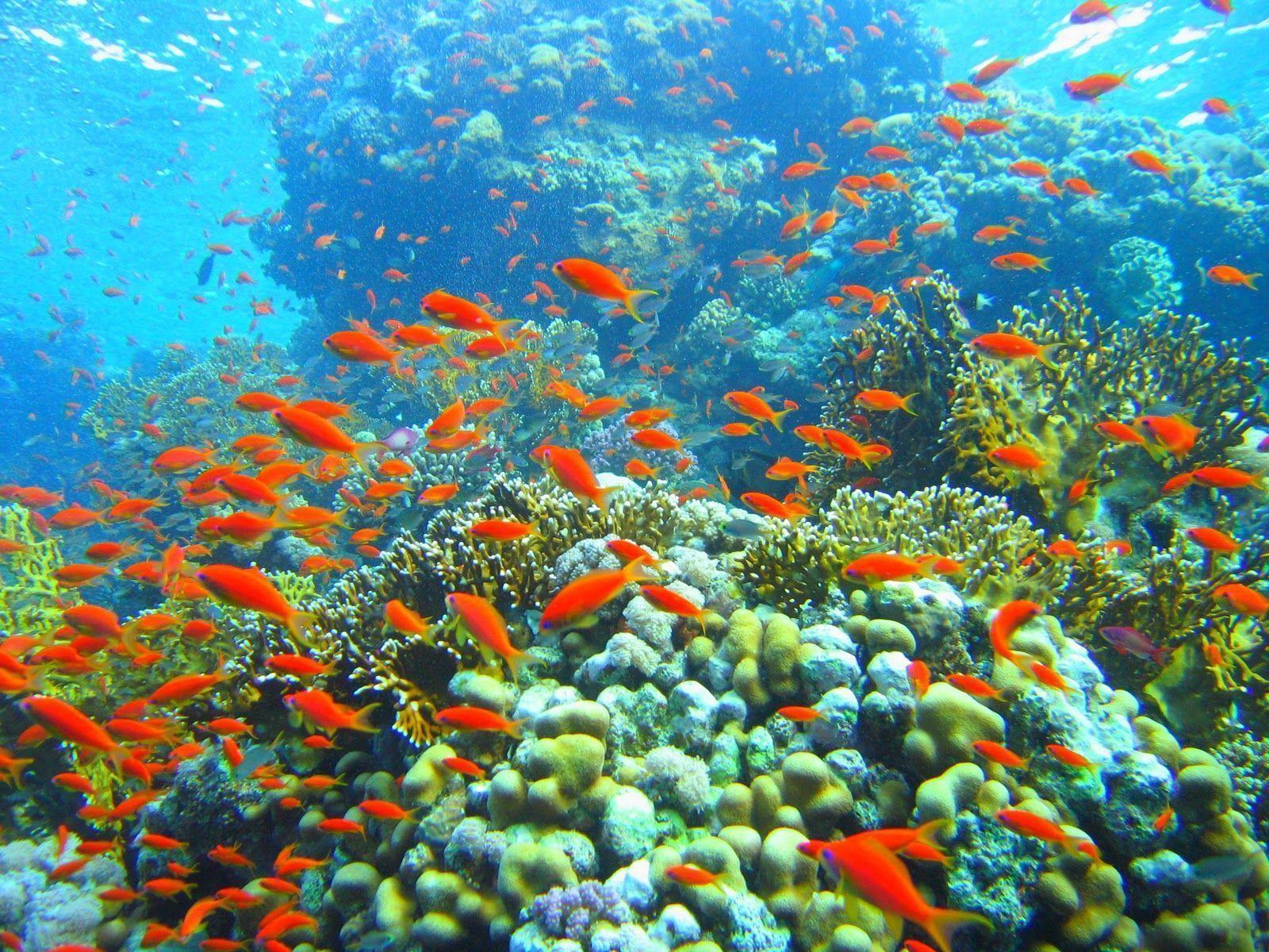 deep ocean desktop wallpaper - photo #34
